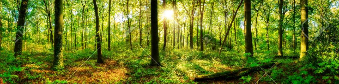 Forest panorama with sun - 69754331