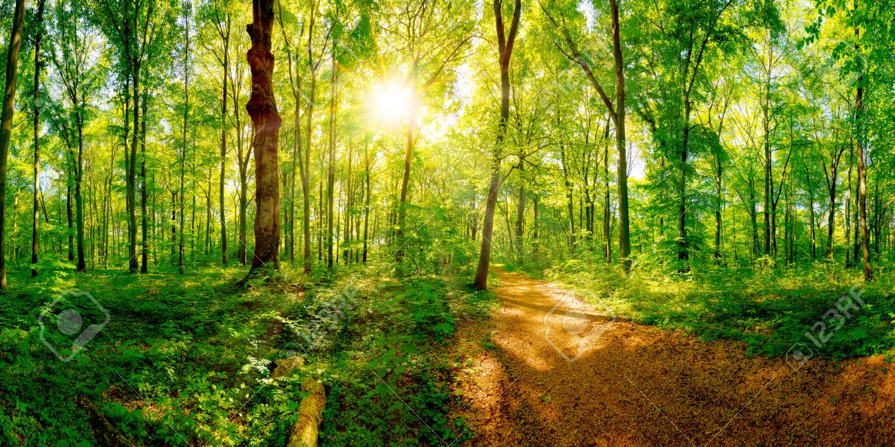 Path through a spring forest in bright sunshine - 93250810
