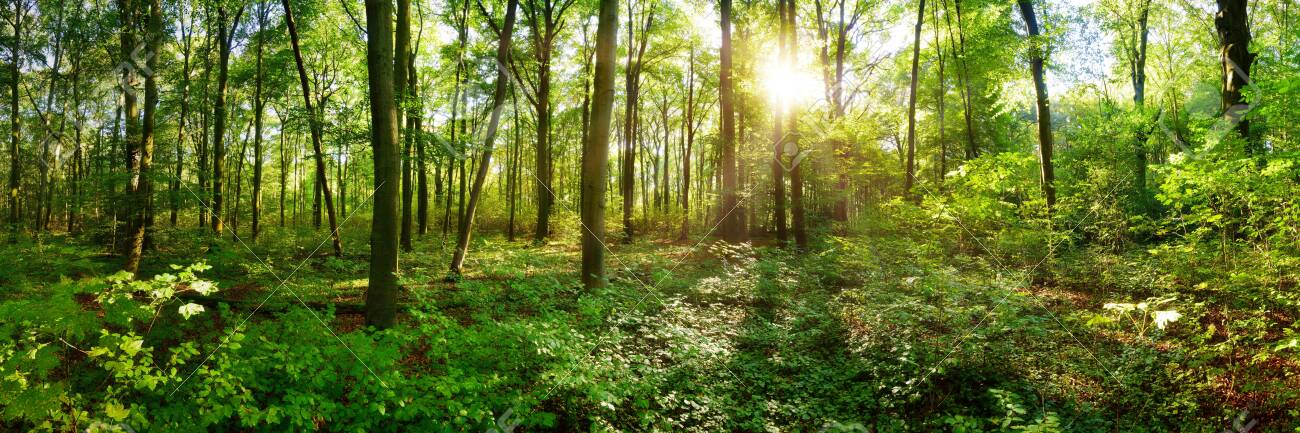 Spring forest with bright sun shining through the trees - 142599653