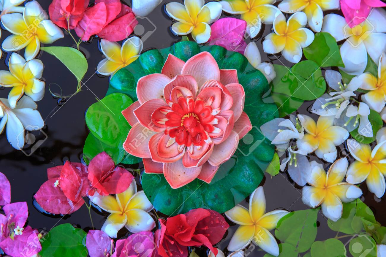 Fake Lotus Flower With Many Colorful Flower In Water Stock Photo