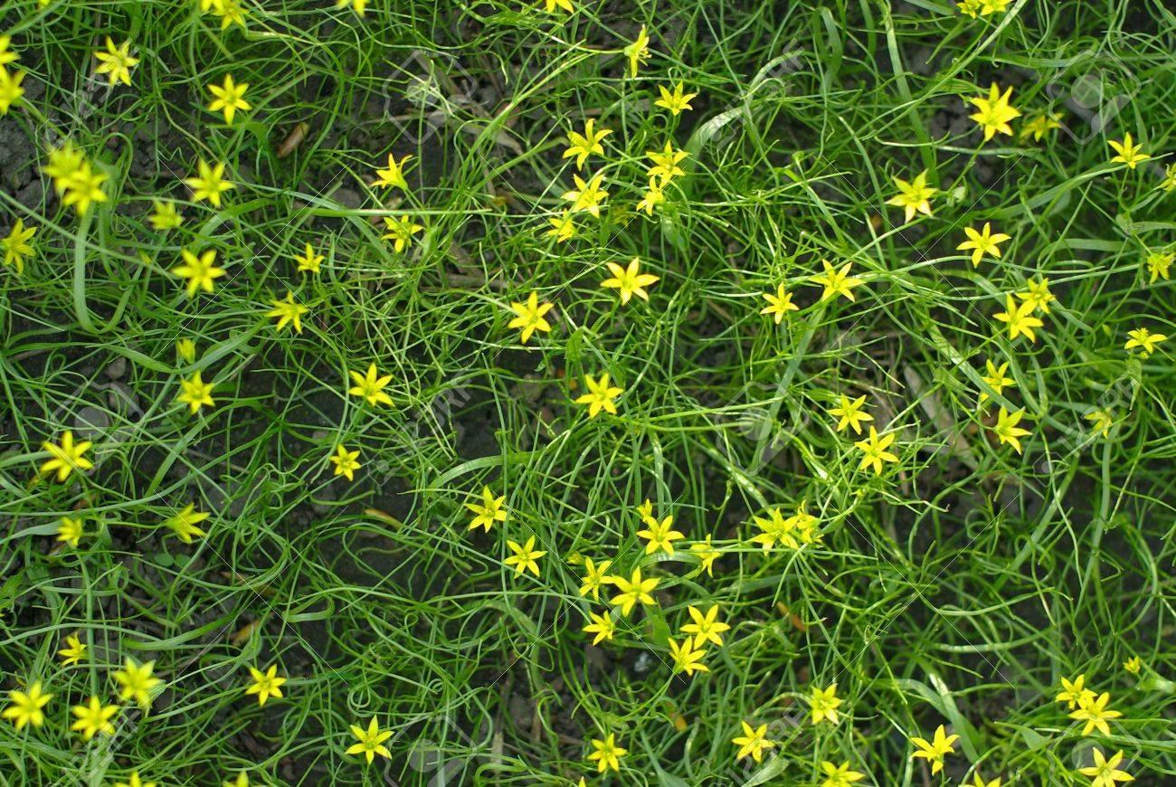 Трава с желтыми мелкими цветами фото