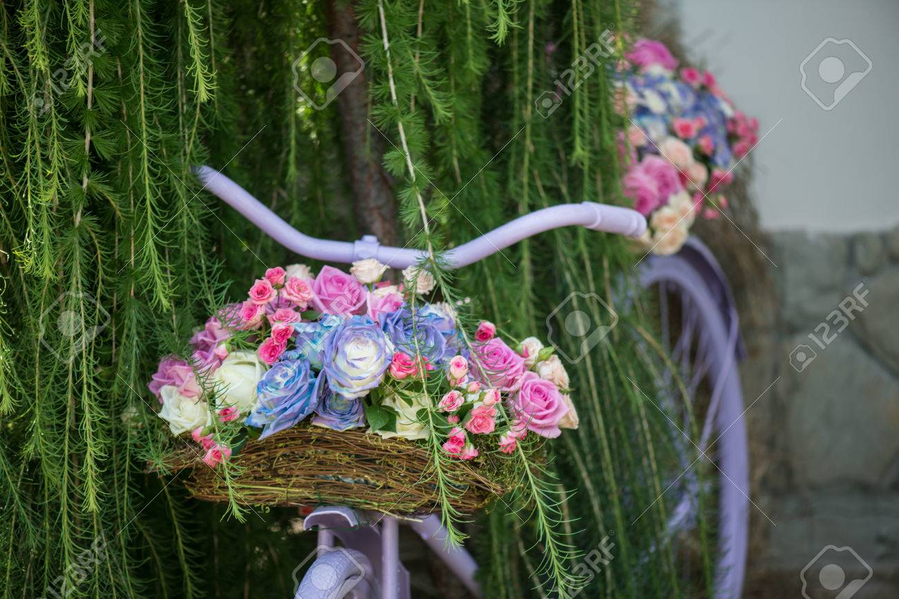 Boje ruže - Page 18 31104356-nice-lilac-bicycle-with-pretty-twisted-basket-of-colored-roses-in-it-standing-under-the-green-tree