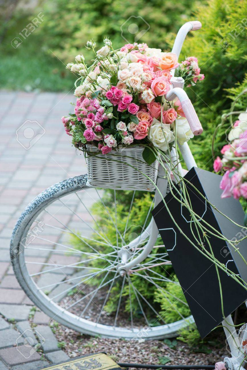 Boje ruže - Page 18 31104330-nice-lilac-bicycle-with-pretty-twisted-basket-of-colored-roses-in-it-standing-near-the-green-bush