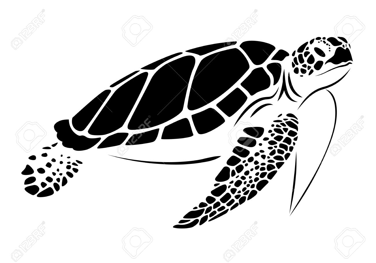 sea turtle stock photos royalty free sea turtle images and pictures