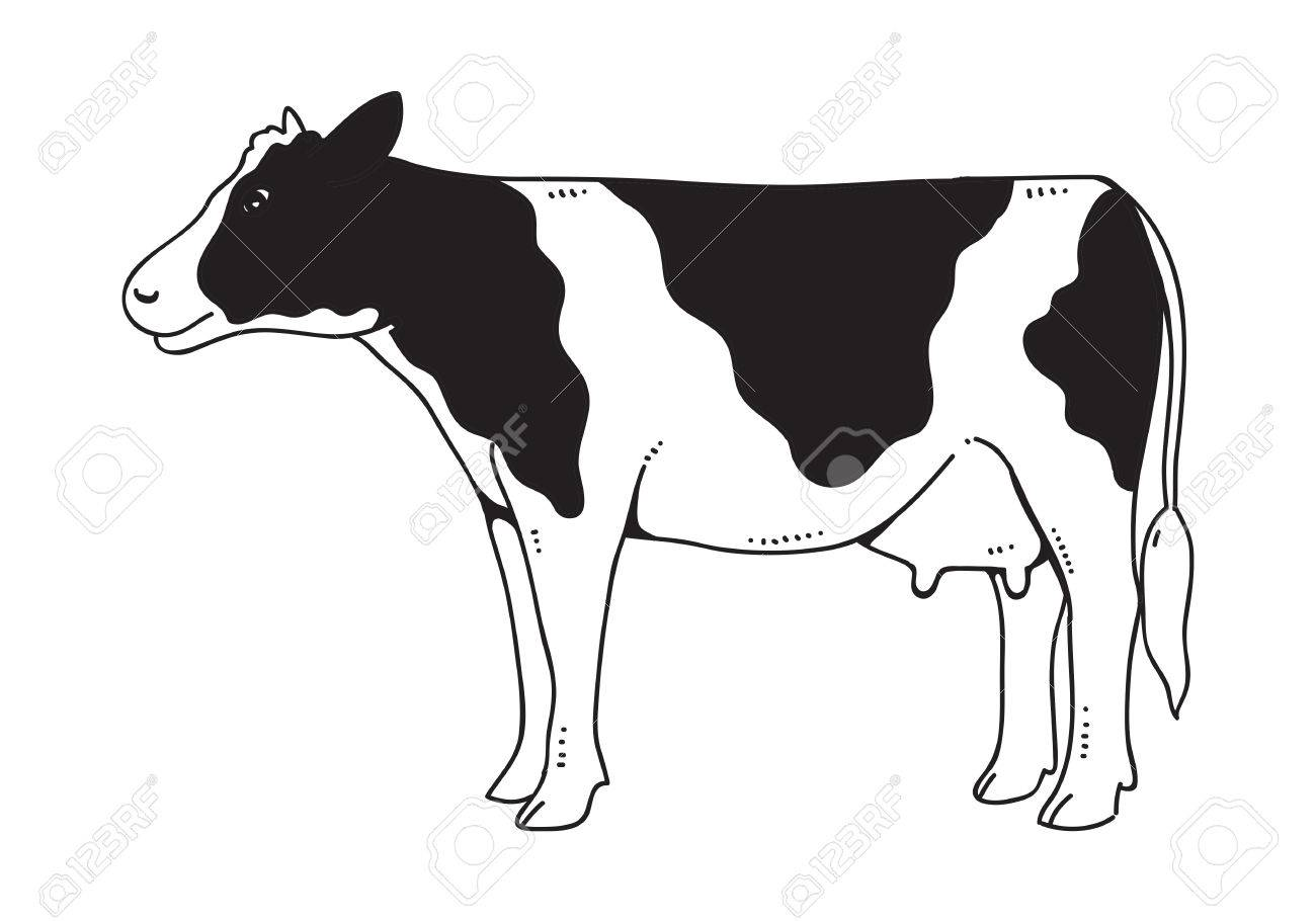 Drawing Cow Vector Stock Vector 68722259