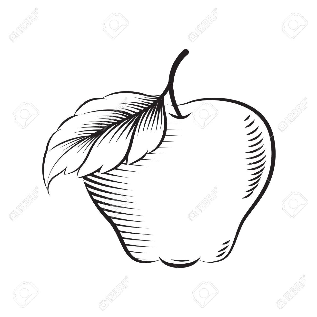 Draw Apple Vector Royalty Free Cliparts Vectors And Stock