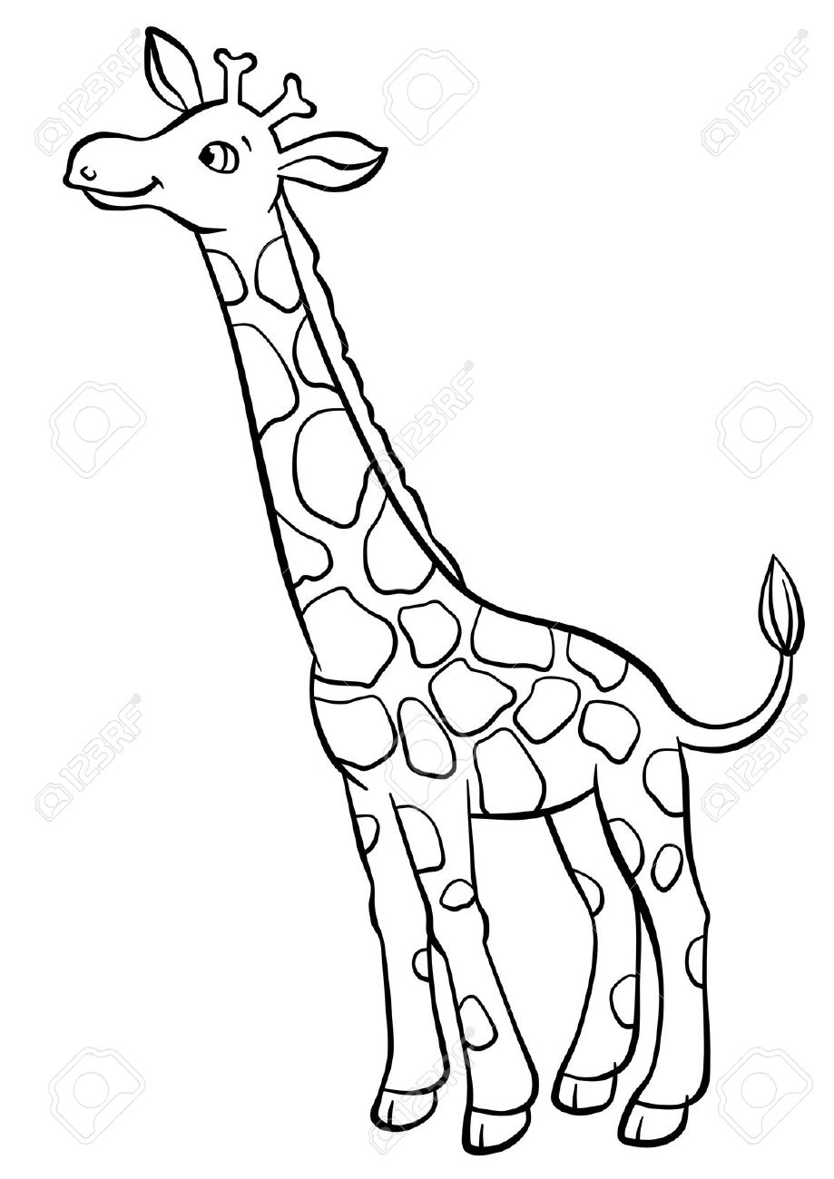 cute giraffe eating leaves from the tree stock photo picture and