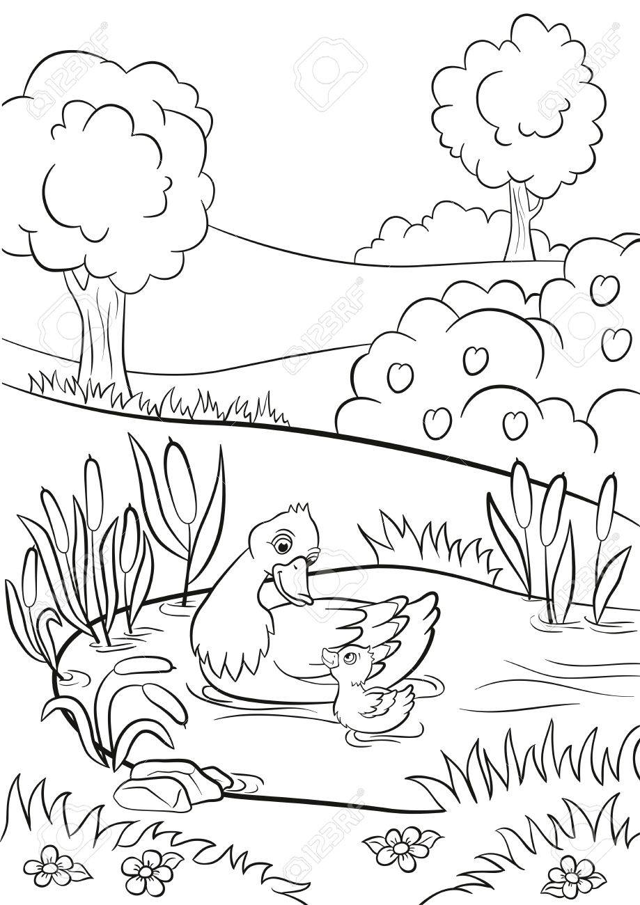 Coloring Pages. Kind Duck And Little Cute Duckling Swim On The ...