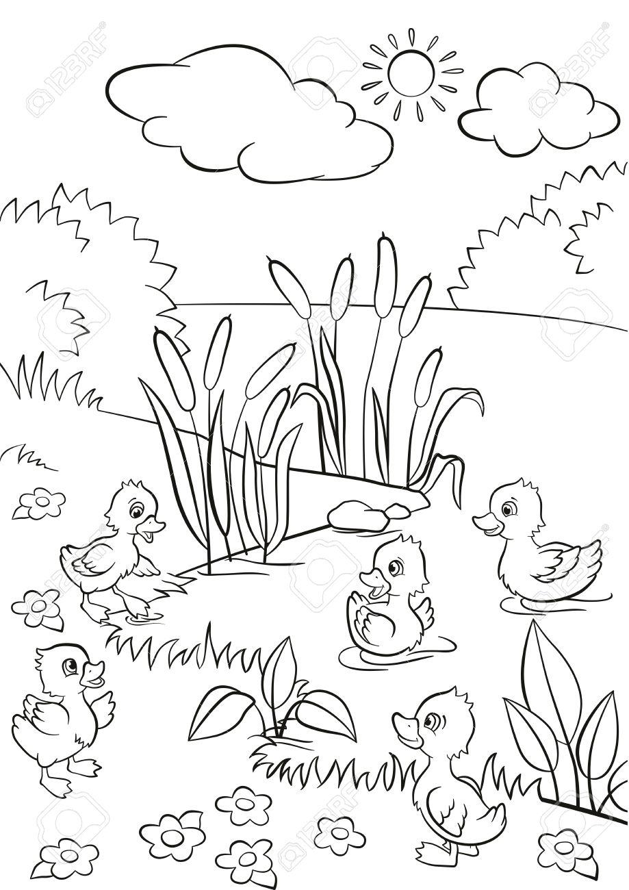Páginas Para Colorear. Cinco Patitos Lindos Nadan En El Lago Y Se ...