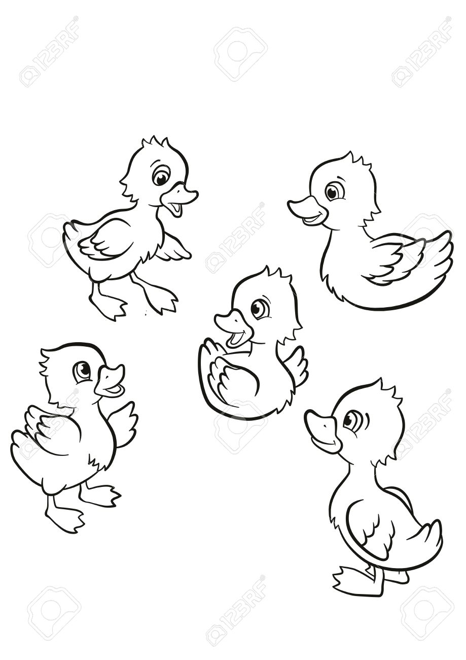Coloring Pages Five Little Cute Ducklings Swim On The Lake And Stand Grass