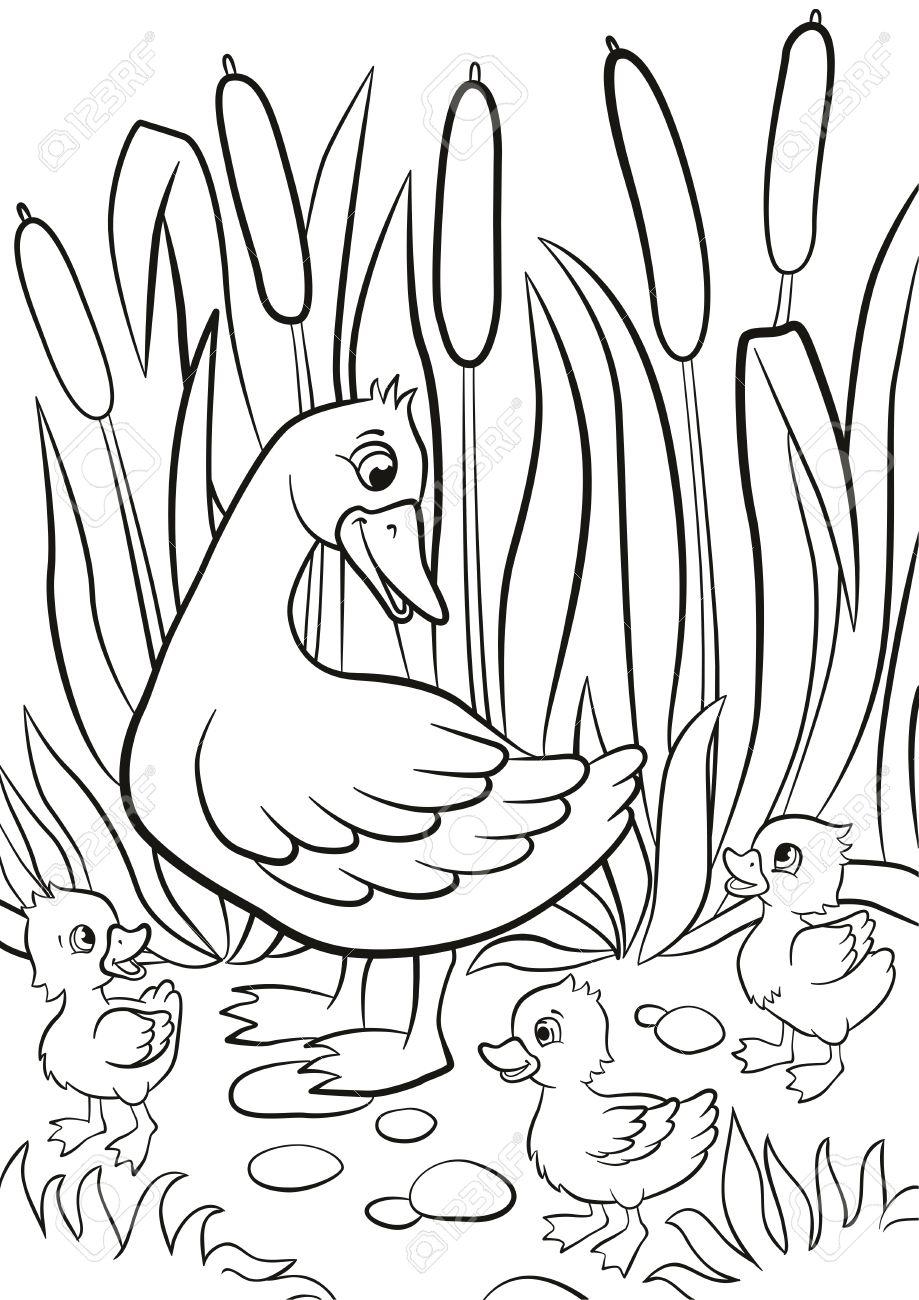 Coloriage Canard Kind Gratuits Et Petits Canetons Mignons à Pied Sur La Rive Du Lac Ils Sont Heureux Et Sourire Il Y A Des Herbes Et Joncs Autour