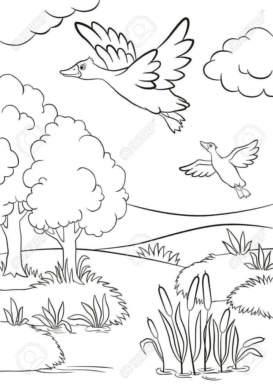 Coloring Pages Two Ducks Fly Under The Lake Lake In In The