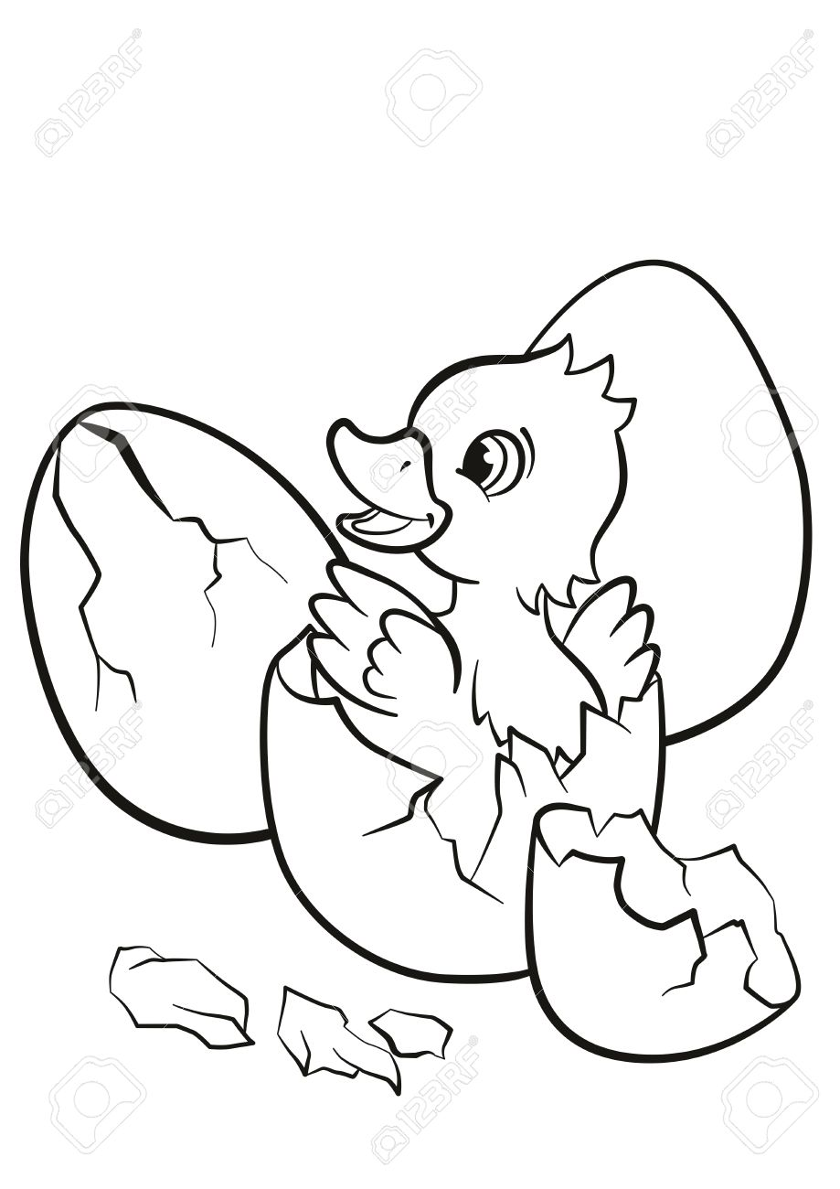 Coloring Pages Little Cute Duckling Hatched From The Egg Its Smiling And