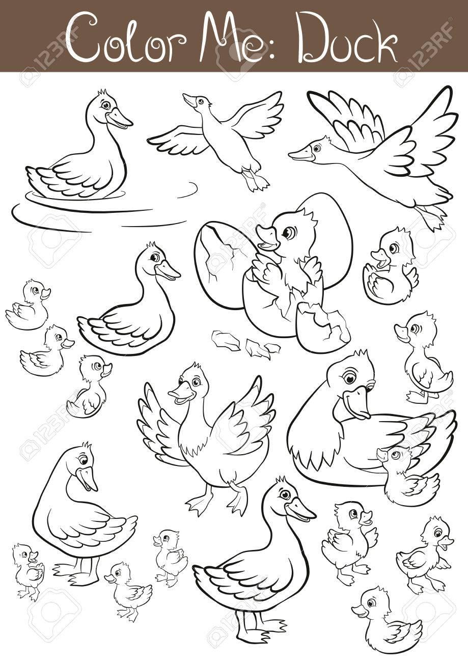 Malvorlagen. Der Satz Von Enten Und Entenküken. Sie Sind Fliegen ...