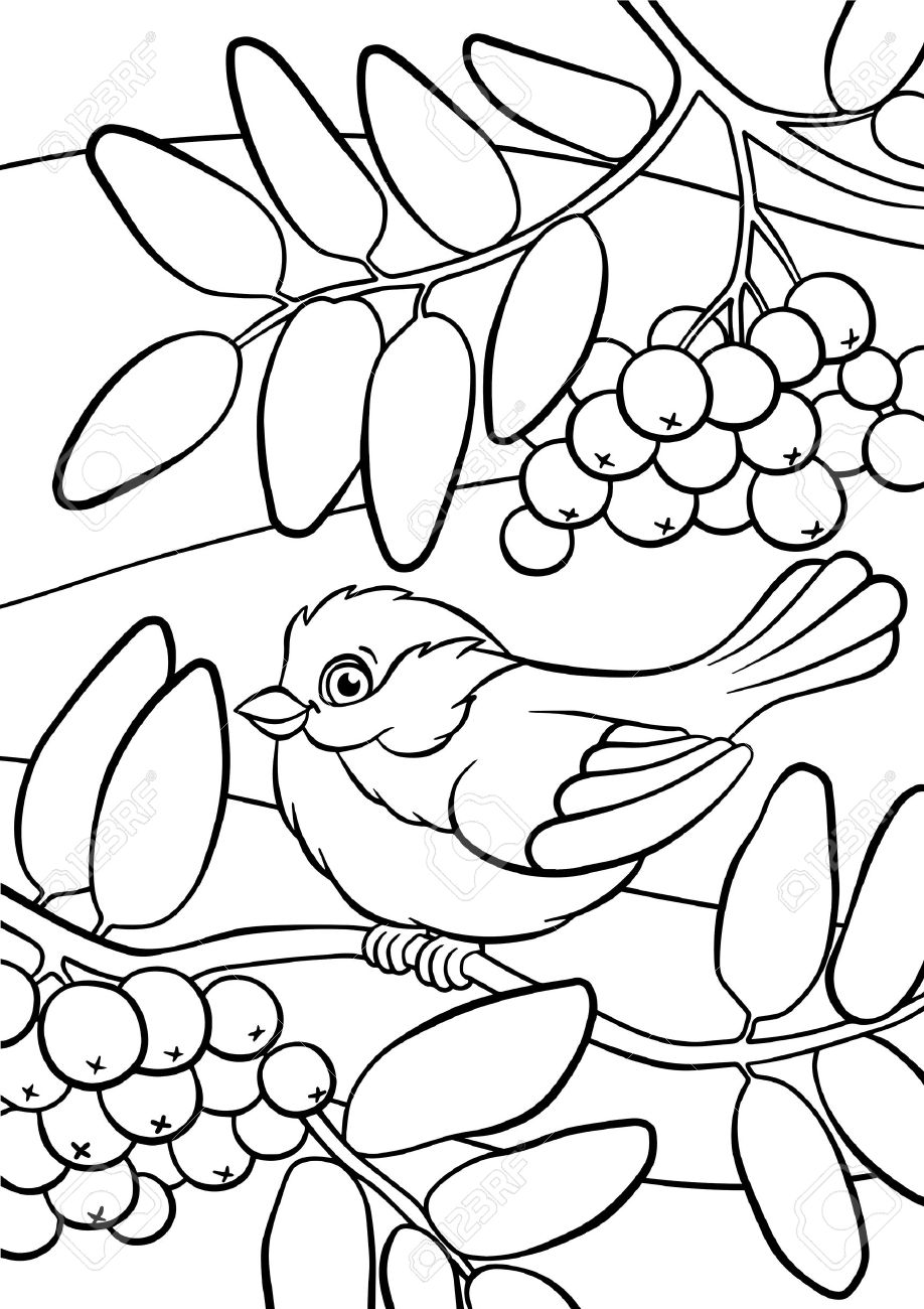 Coloring Pages Birds Little Cute Titmouse Sits On The Mountain Ash Stock Vector