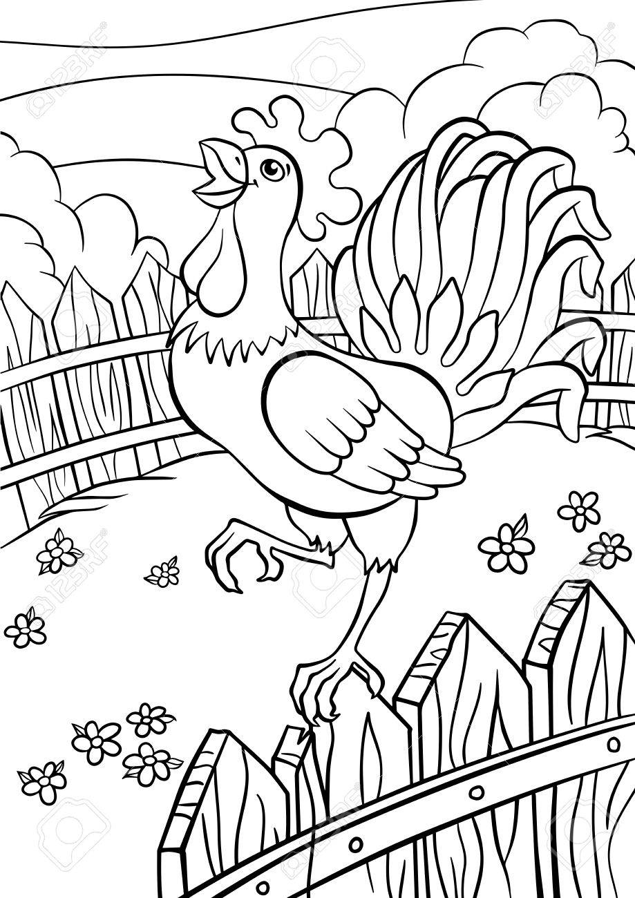 Coloring Pages Birds Cute Rooster Stands On The Fence And Cries Stock Vector