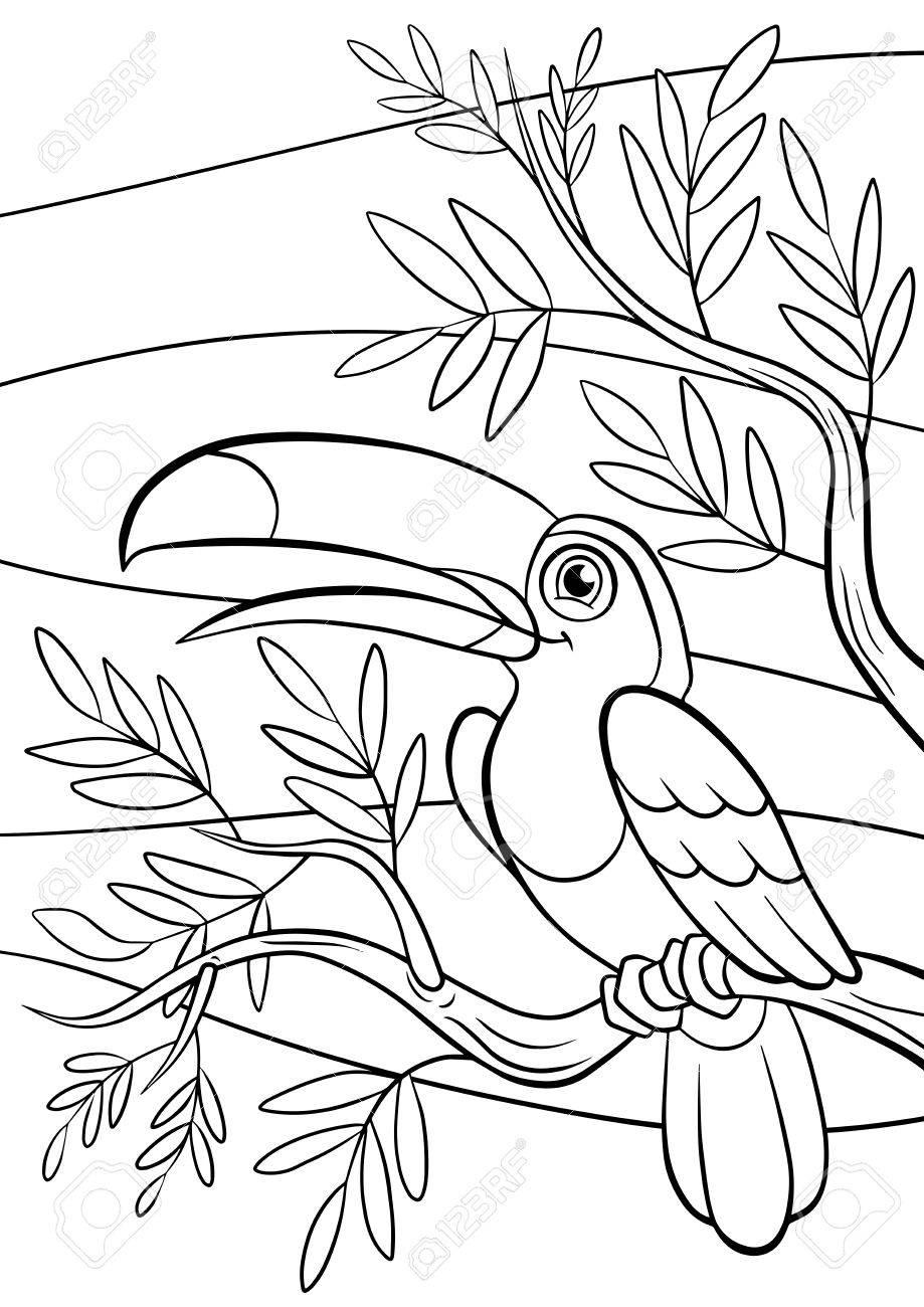 Páginas Para Colorear. Aves. Poco Tucán Lindo Se Sienta En El Banch ...