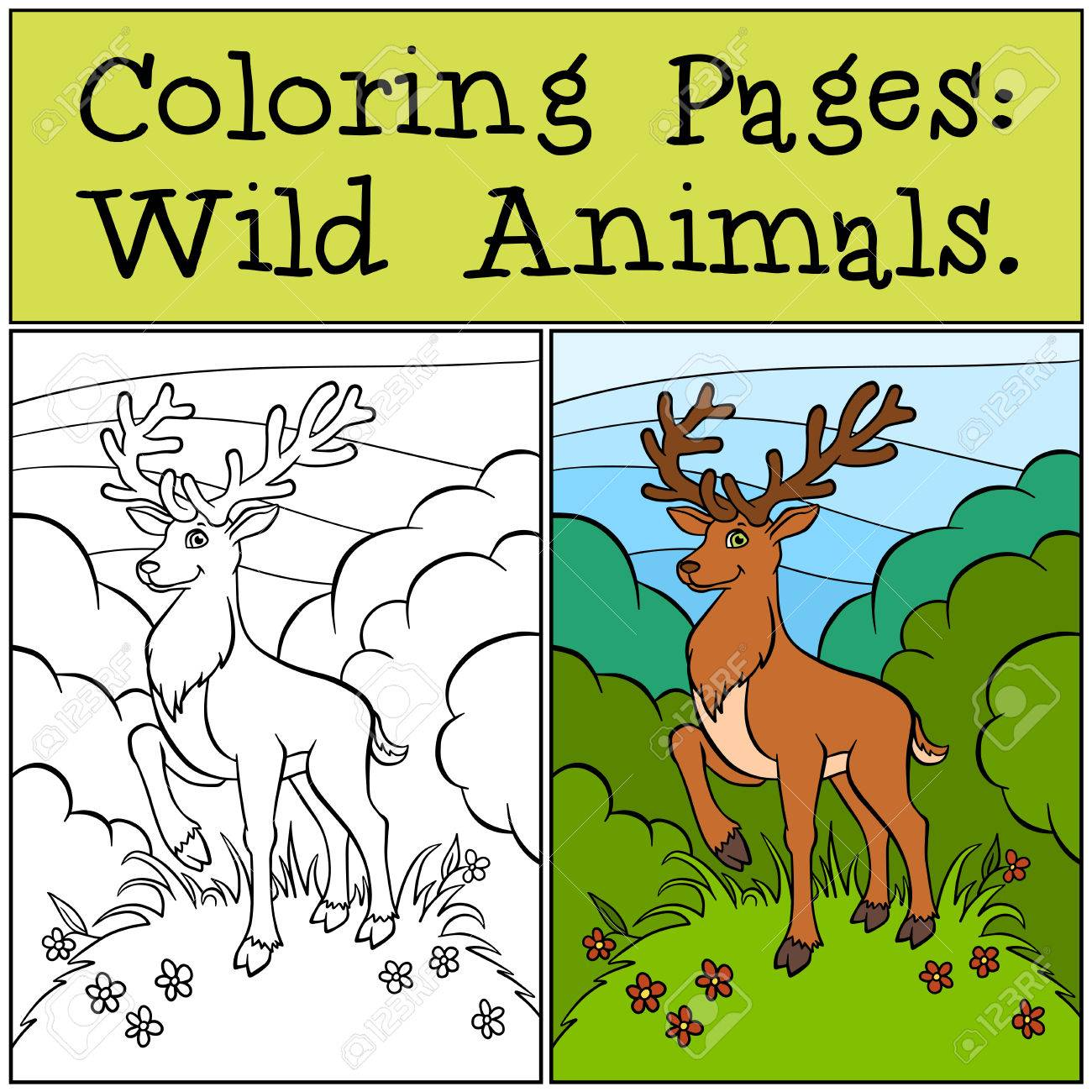Coloring Pages Wild Animals Cute Deer Stands On The Clearing In Forest