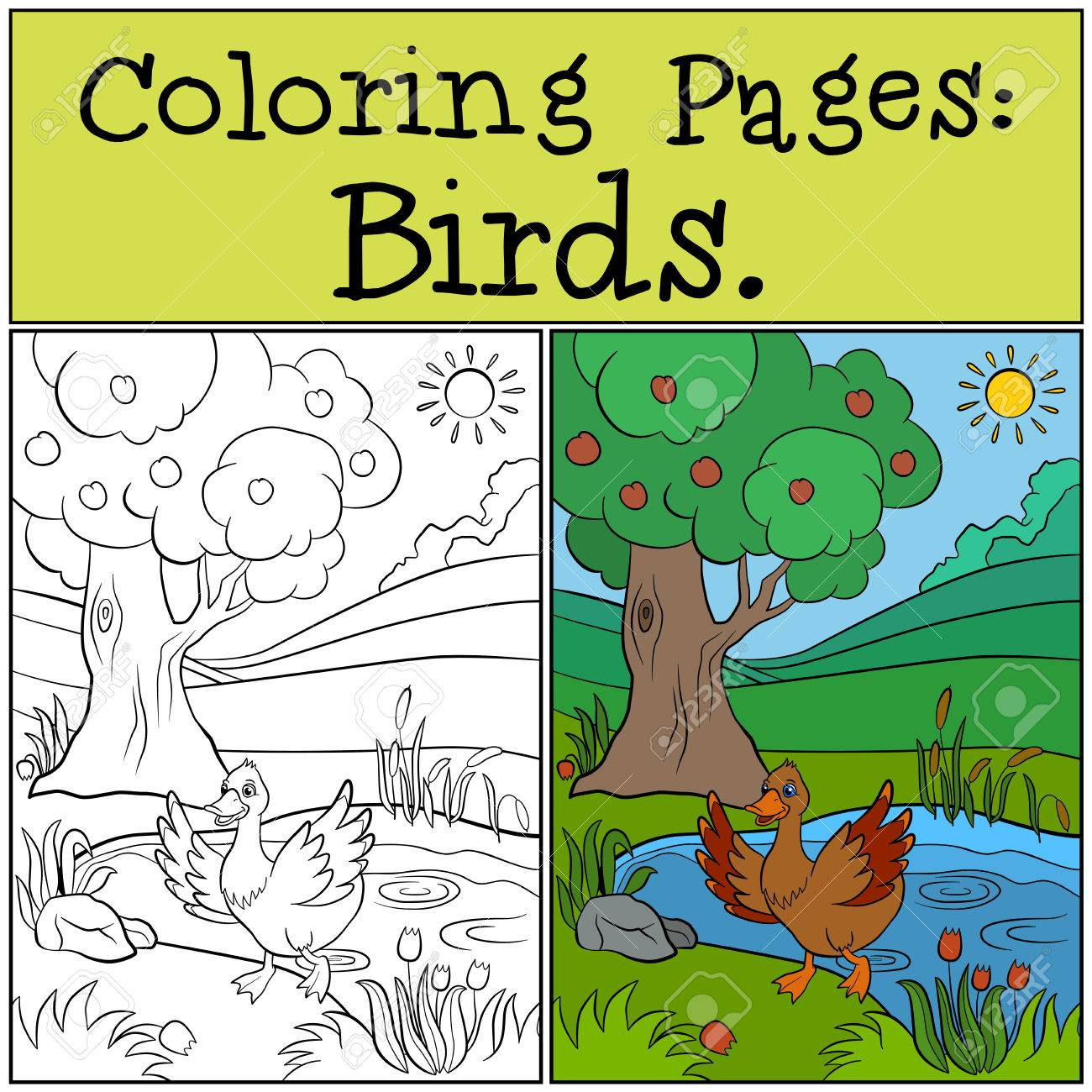 Coloring Pages: Birds. Little Cute Duck Runs From The Pond. Royalty ...