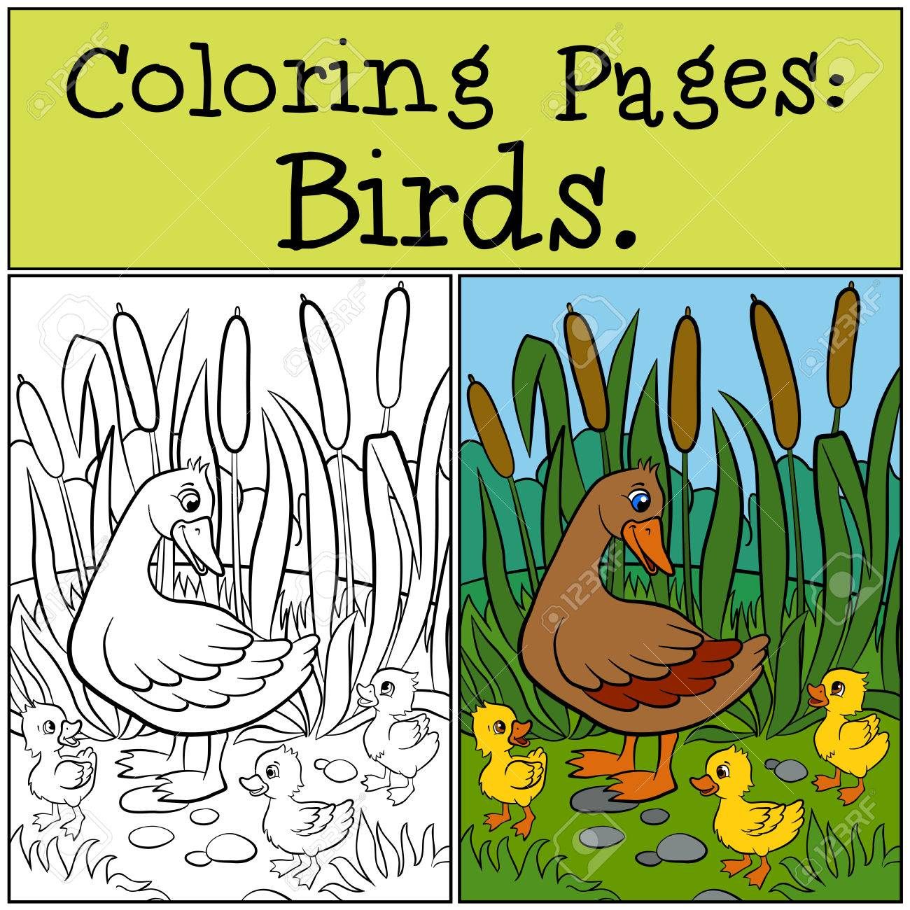 Malvorlagen: Vögel. Mutter Ente Mit Ihrem Kleinen Süßen Entlein ...