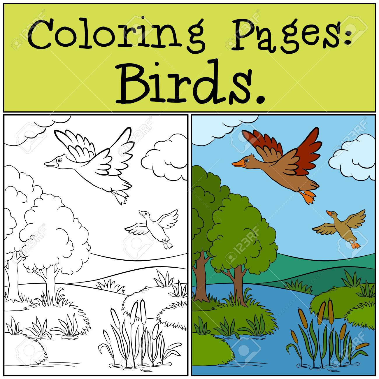 Coloring Pages: Birds. Two Little Cute Ducks Fly Under The Pond ...