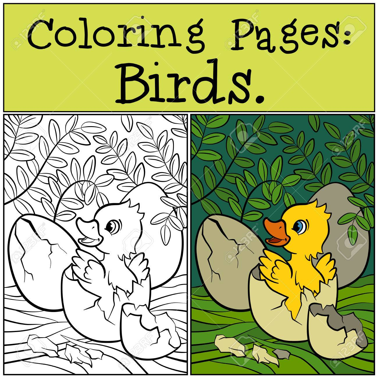 Coloring Pages: Birds. Little Cute Duckling In The Egg. Royalty Free ...