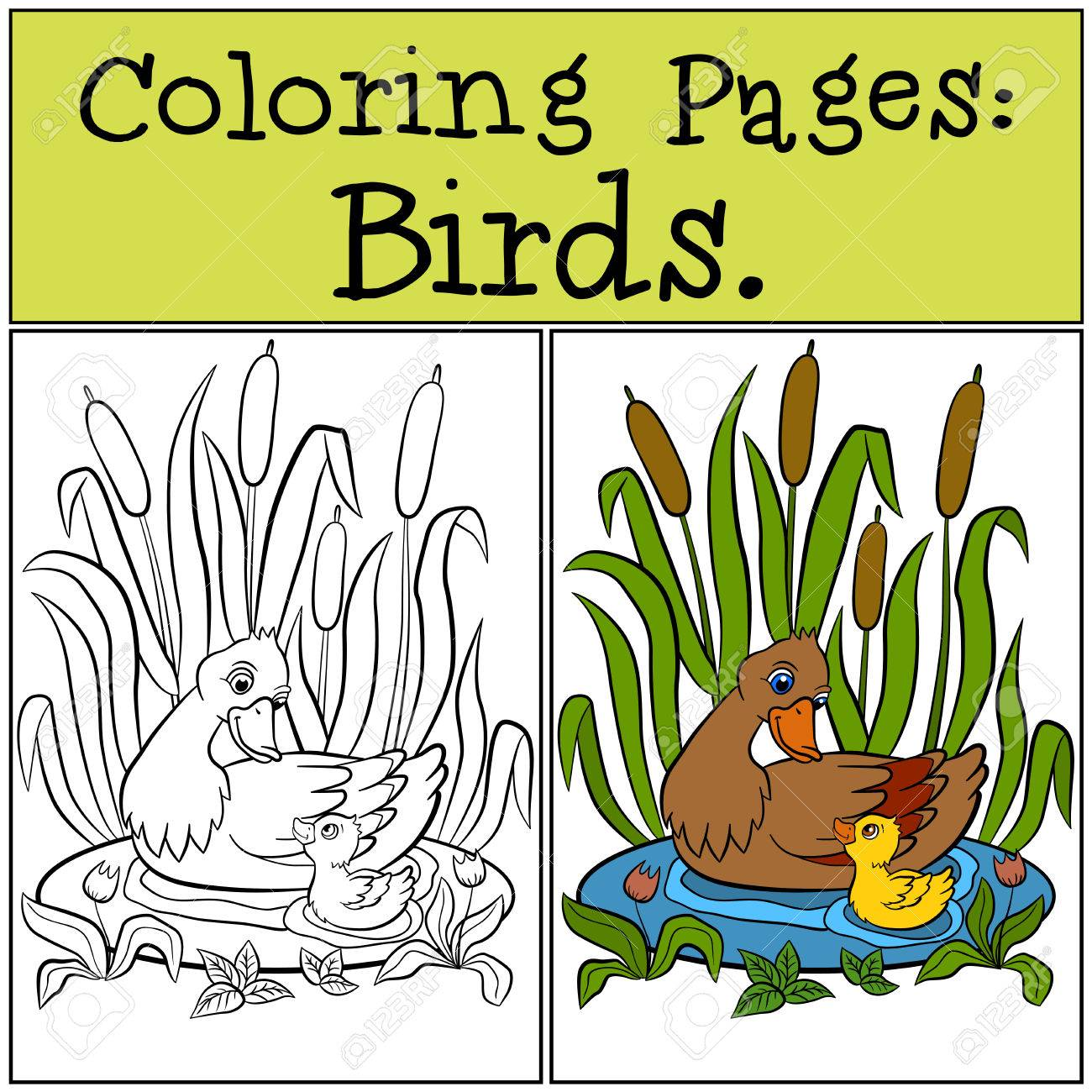 Coloring Pages: Birds. Mother Duck With Her Little Cute Duckling ...