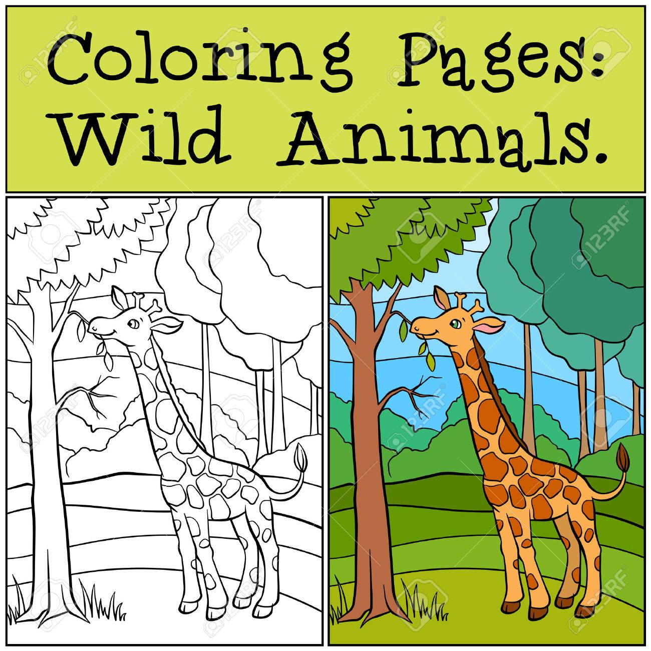 Coloring Pages: Wild Animals. Little Cute Giraffe Stands In The ...