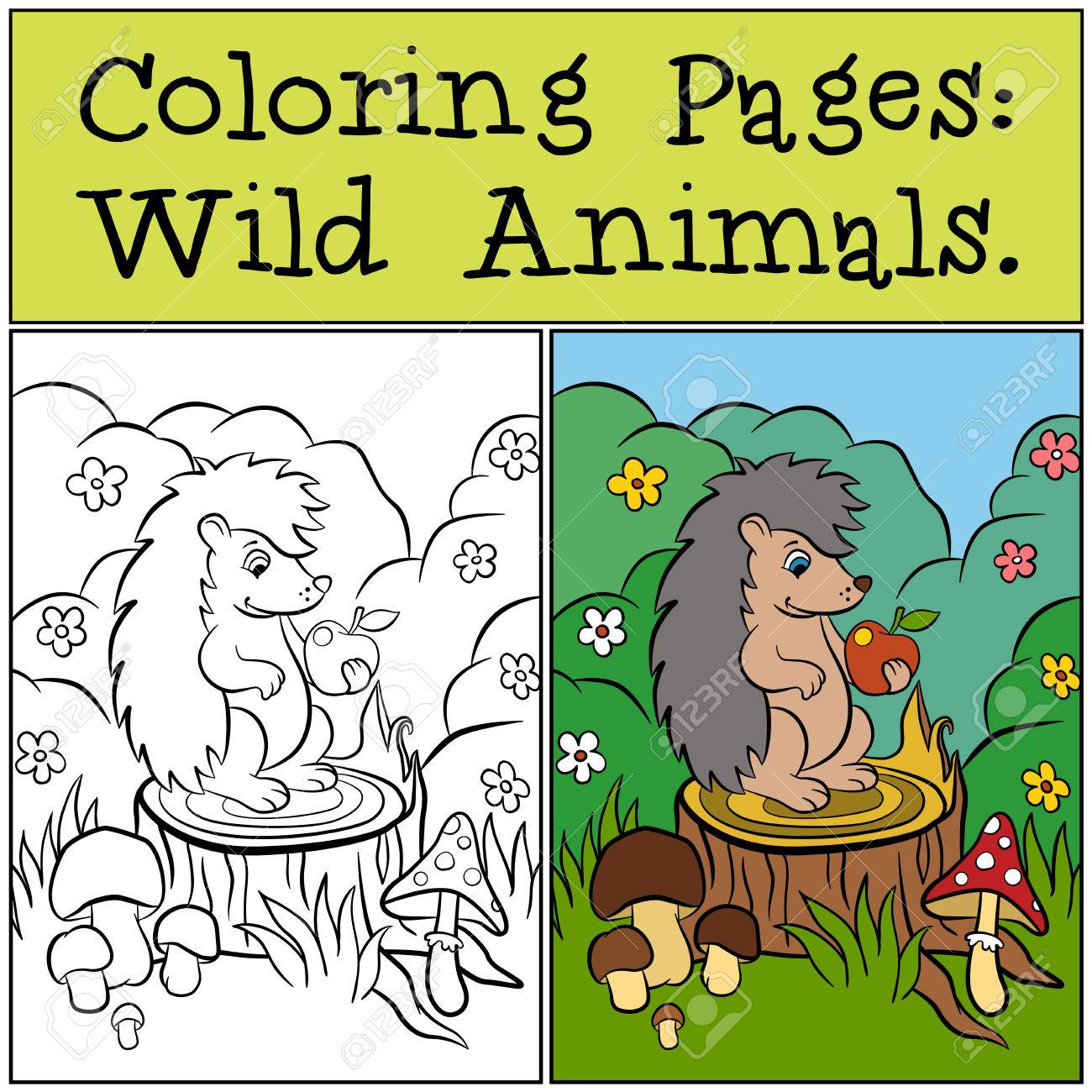Coloring Pages: Wild Animals. Little Cute Hedgehog Sits On The ...
