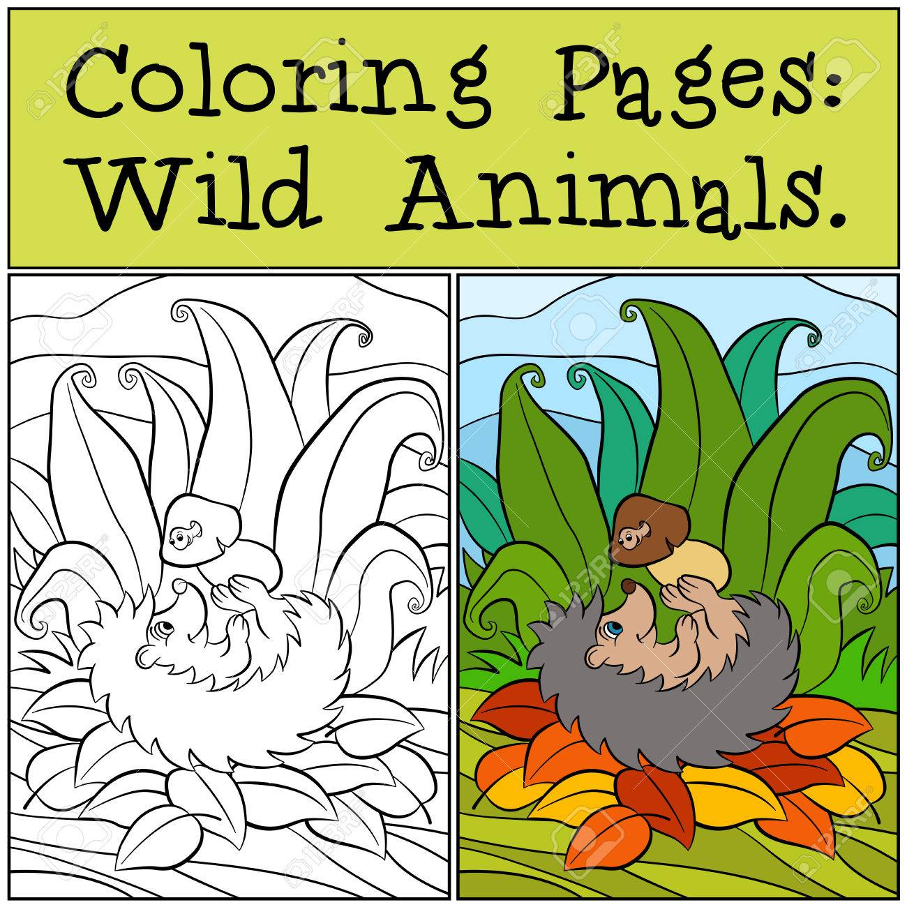 Coloring Pages: Wild Animals. Little Cute Hedgehog Holds The ...