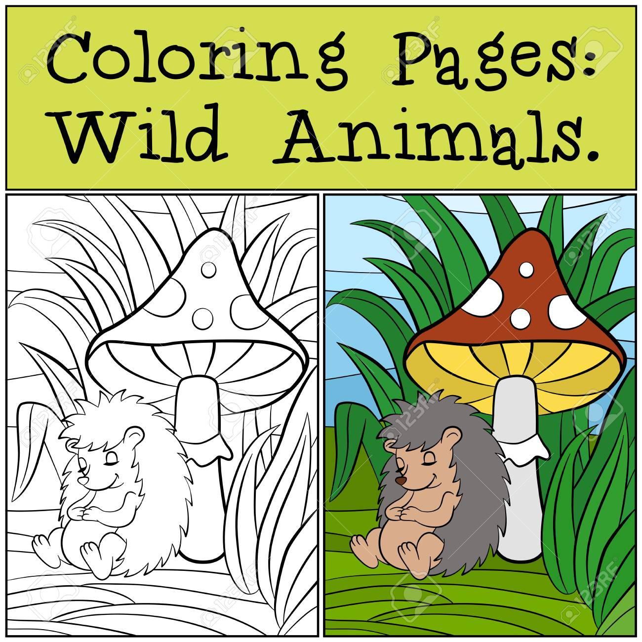 Coloring Pages: Wild Animals. Little Cute Hedgehog Sleeps Near ...
