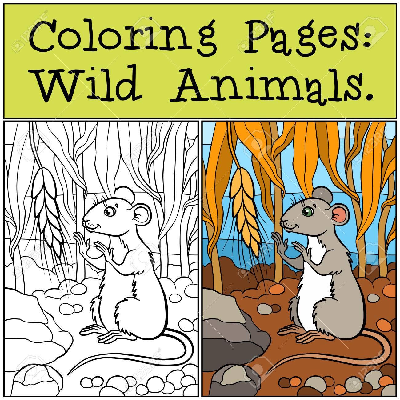 Coloriage Animaux sauvages Petite souris mignonne regarde le blé Banque d images