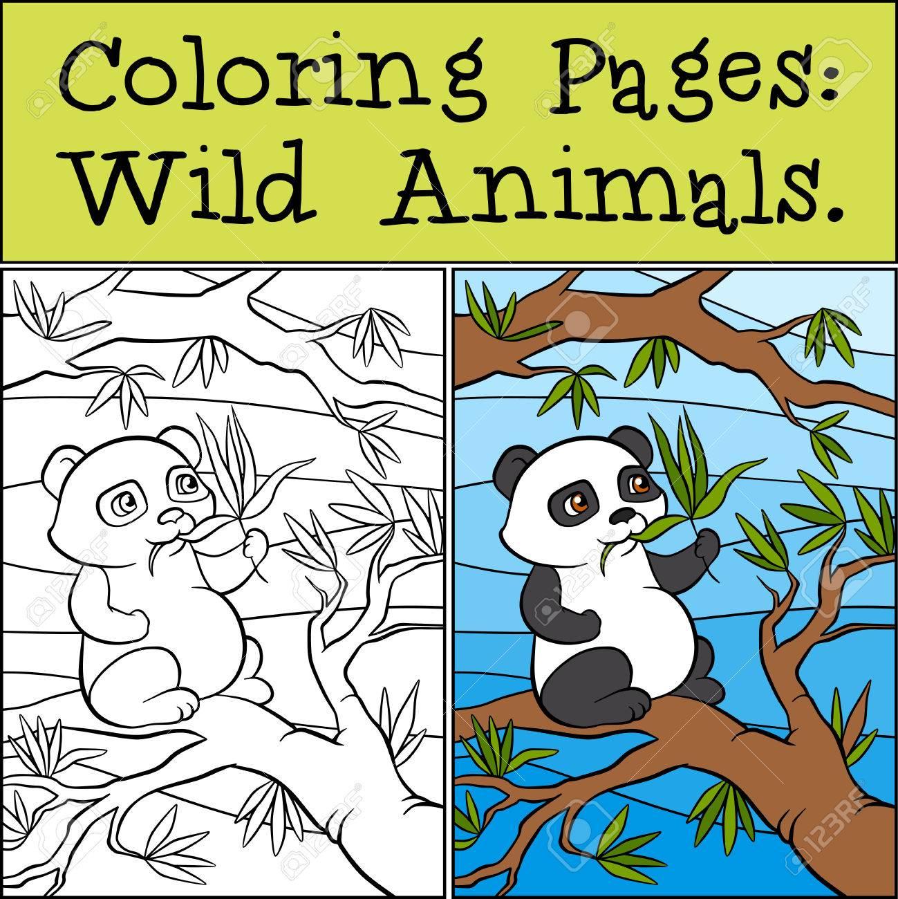Malvorlagen: Wild Animals. Kleine Nette Pands Sitzt Auf Dem Baum Und ...