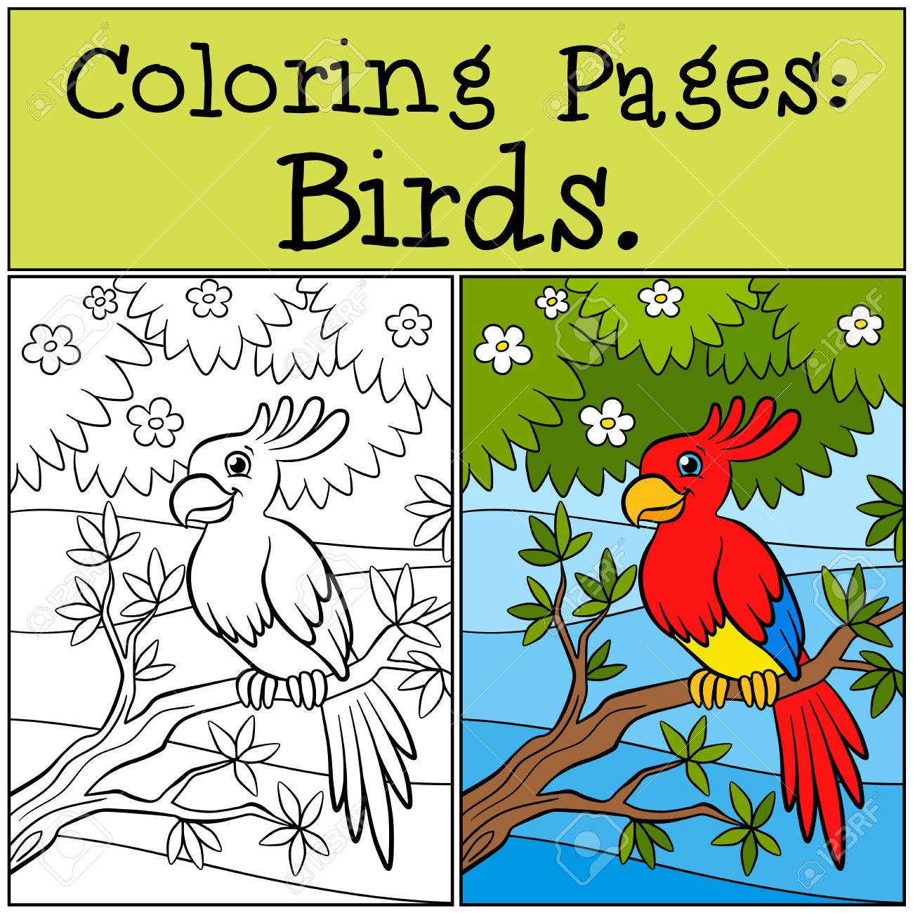 Coloring Pages: Birds. Little Cute Parrot Sits On The Tree Branch ...