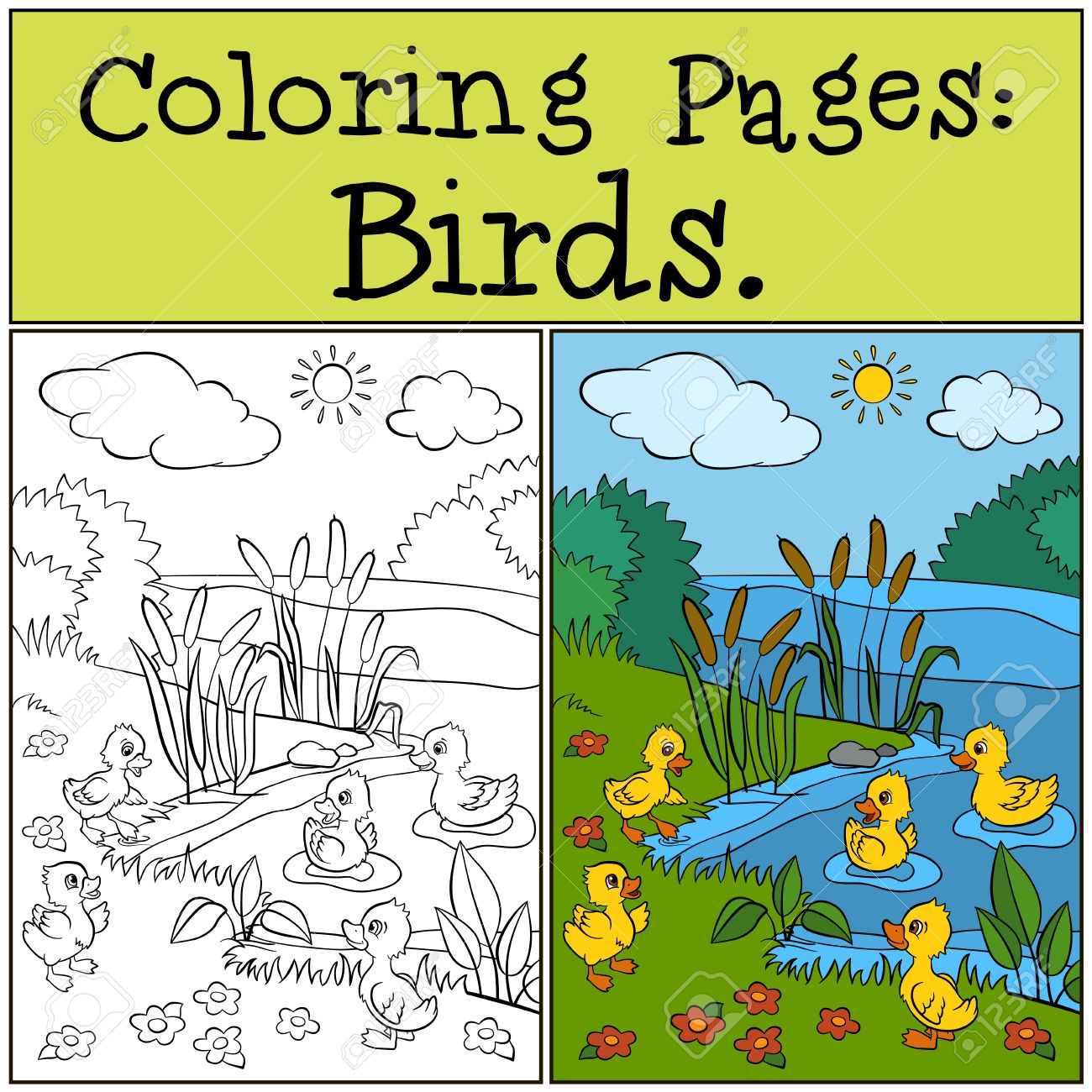 Coloring Pages: Birds. Little Cute Ducklings Play Near The Pond ...