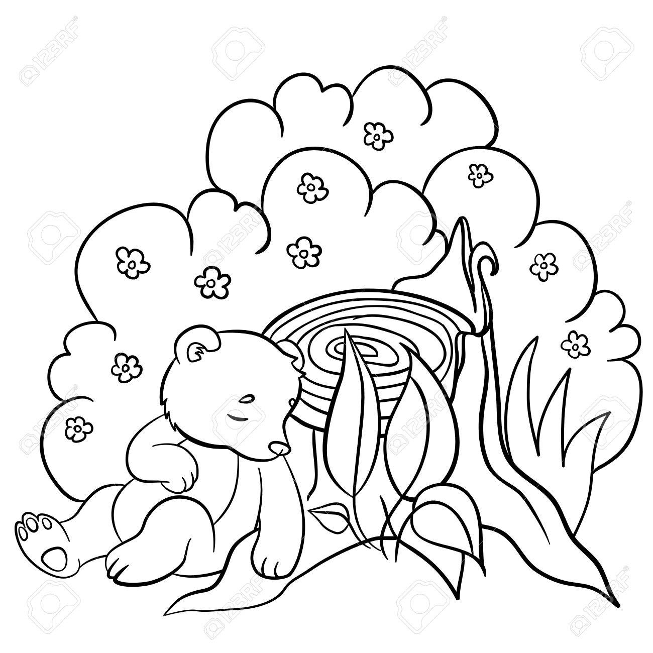 Coloring Pages. Wild Animals. Little Cute Baby Bear Sleeps In ...