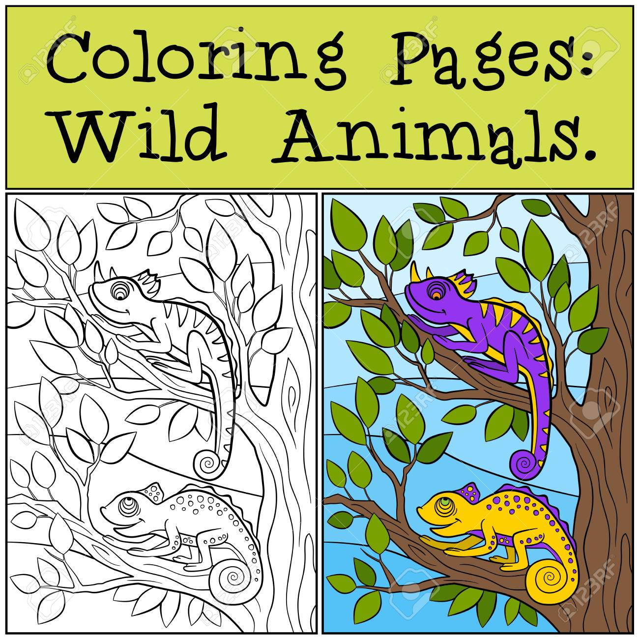 Coloring Pages: Wild Animals. Two Little Cute Chameleons Sits ...