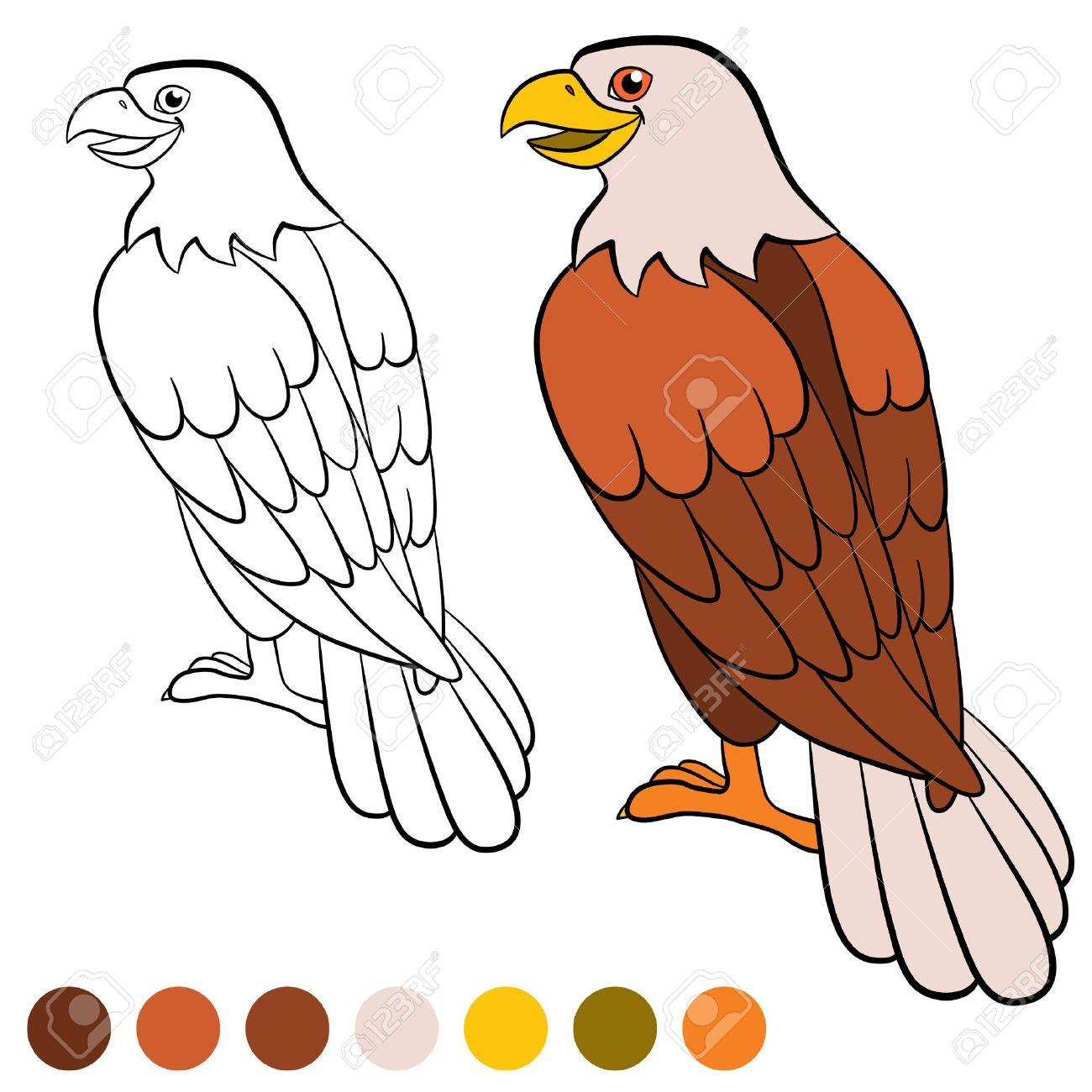 Dibujo Para Colorear Color Me águila águila Calva Lindo Se Sienta