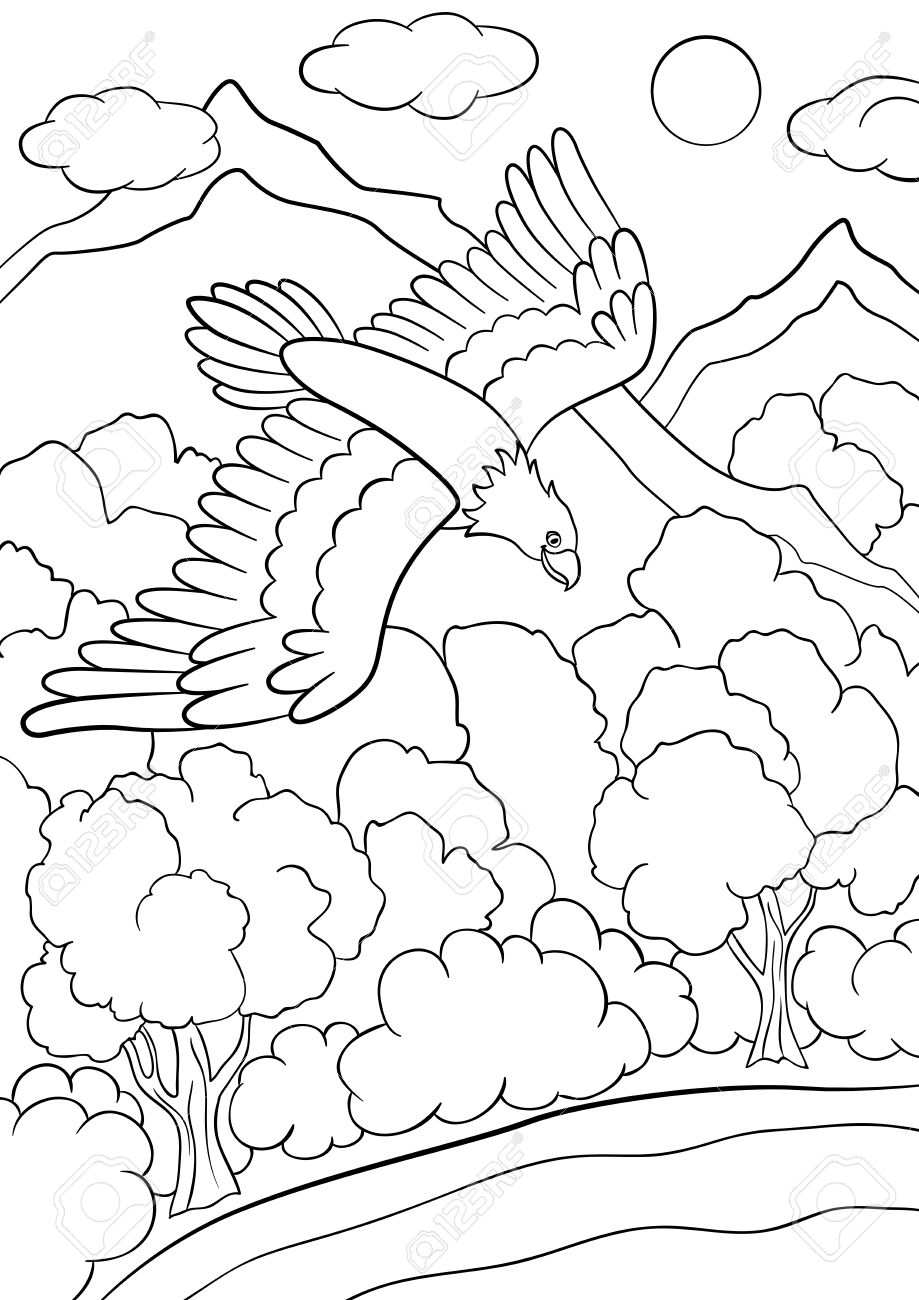 Bald eagle Coloring book Colouring Pages Golden eagle, eagle PNG ... | 1300x919