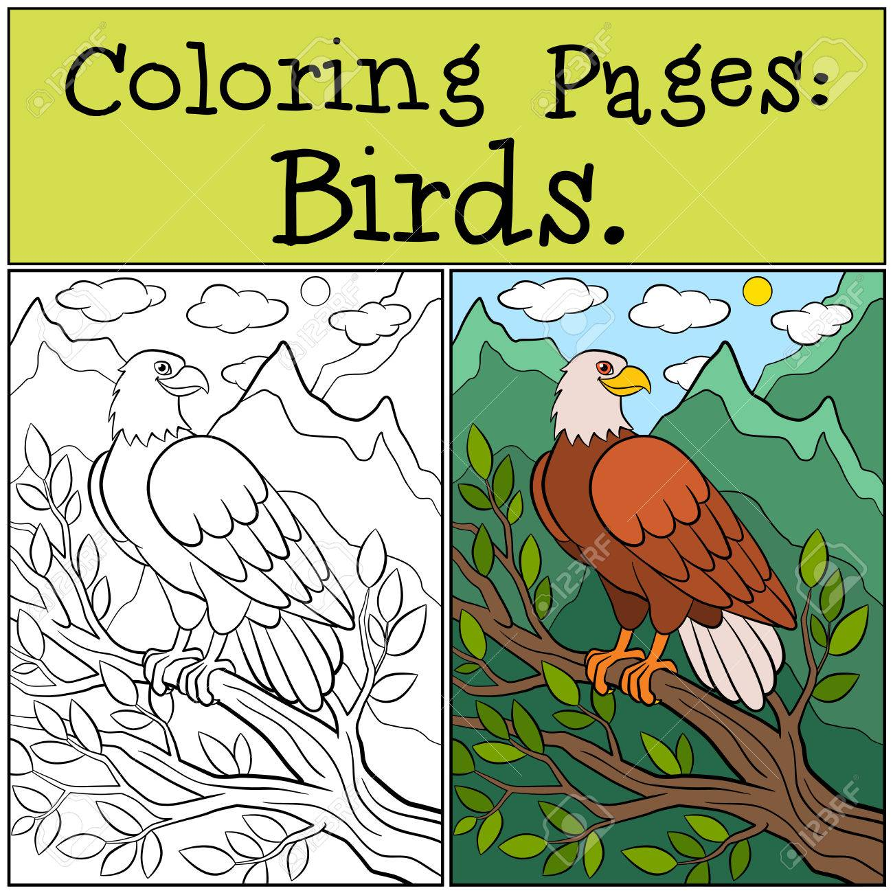 Coloring Pages: Wild Birds. Cute Bold Eagle Sits On The Tree ...