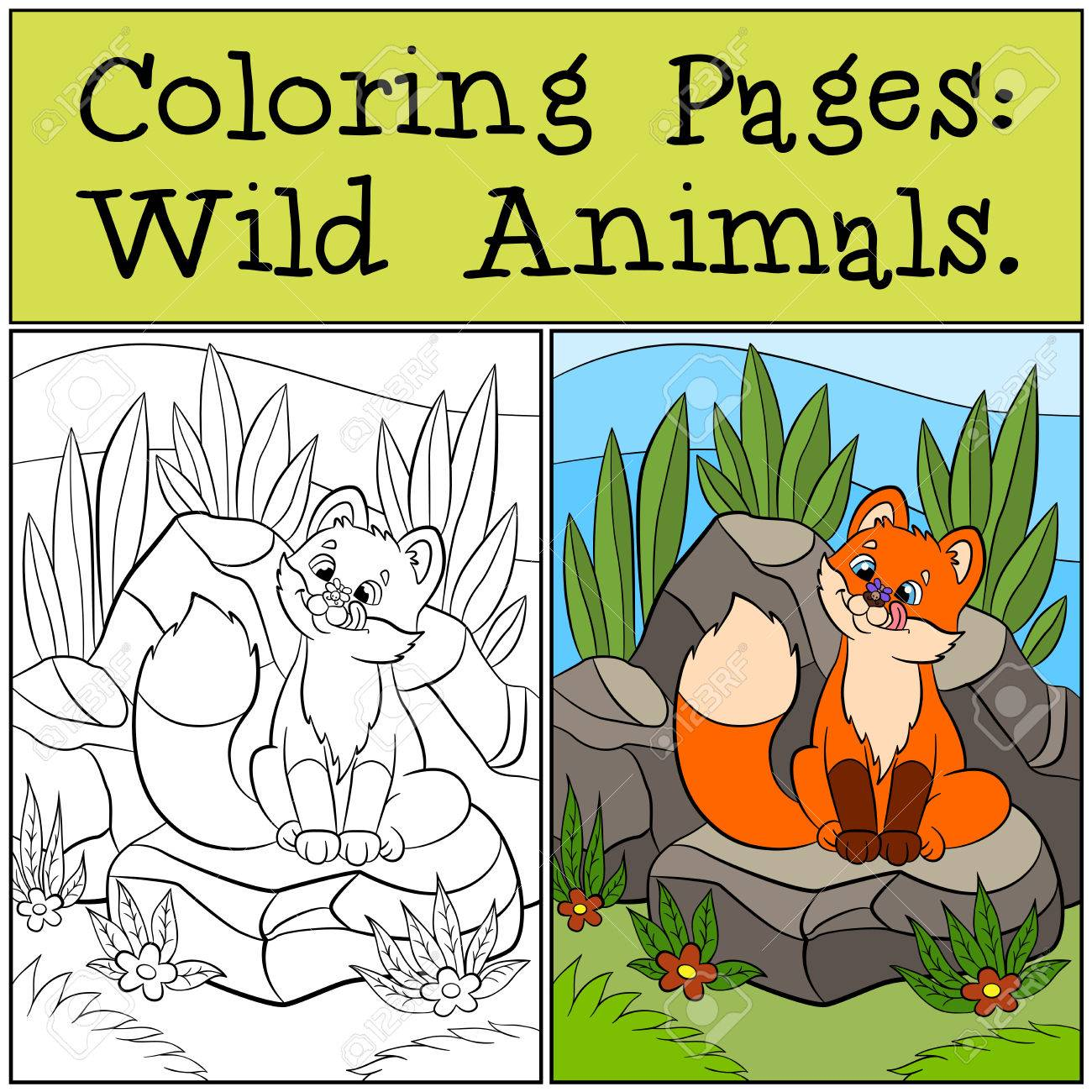Páginas Para Colorear: Animales Salvajes. Lindo Zorro Bebé Se Sienta ...