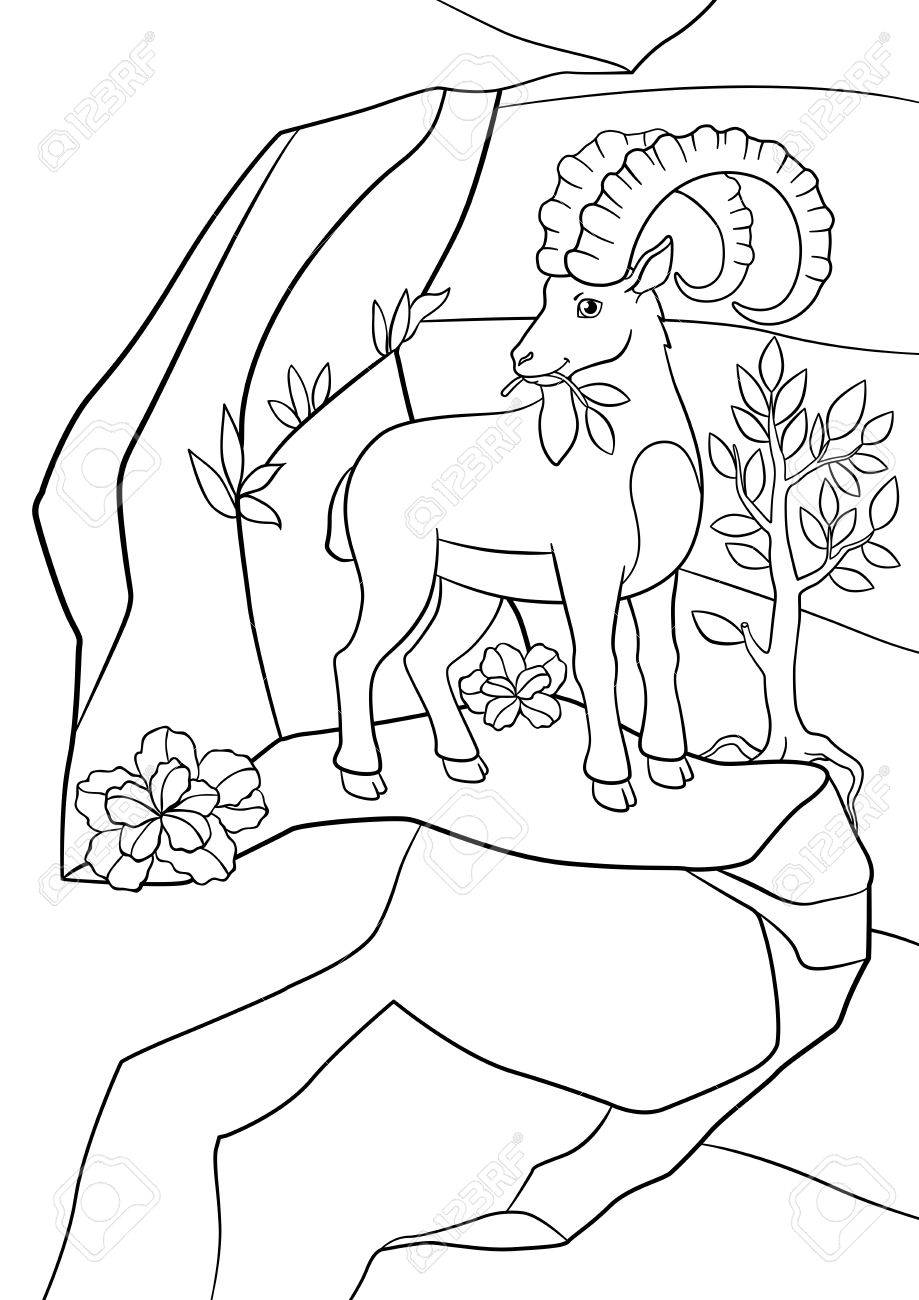 Páginas Para Colorear Ibex Lindo Con Grandes Cuernos Comen Las Hojas En La Roca
