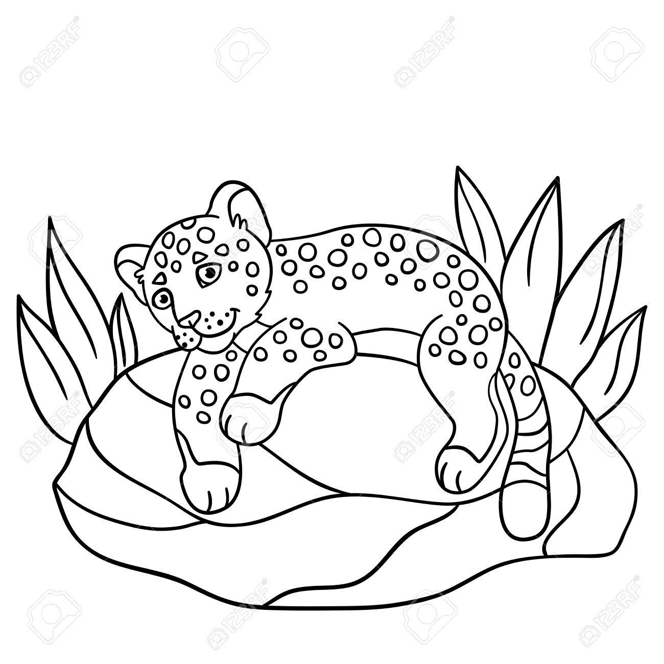 Coloring Pages. Little Cute Baby Jaguar Lays On The Stone And ...