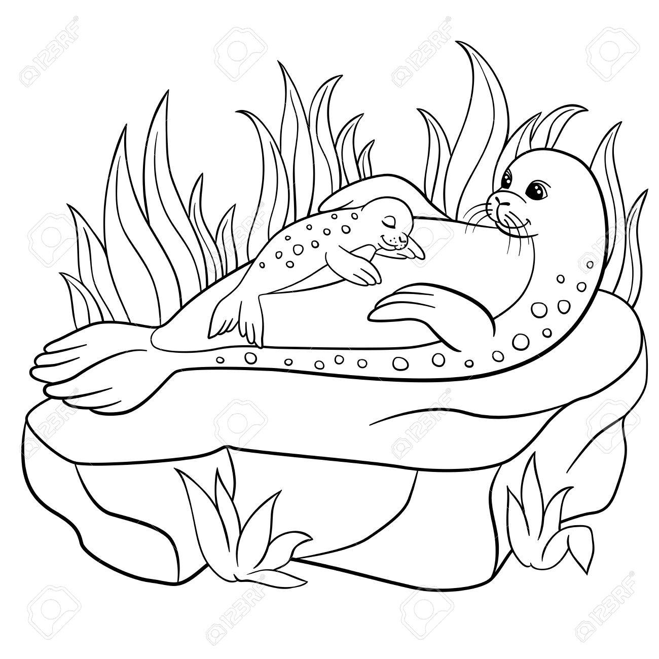Coloring Pages Mother Seal With Her Little Cute Baby On The Stone Stock