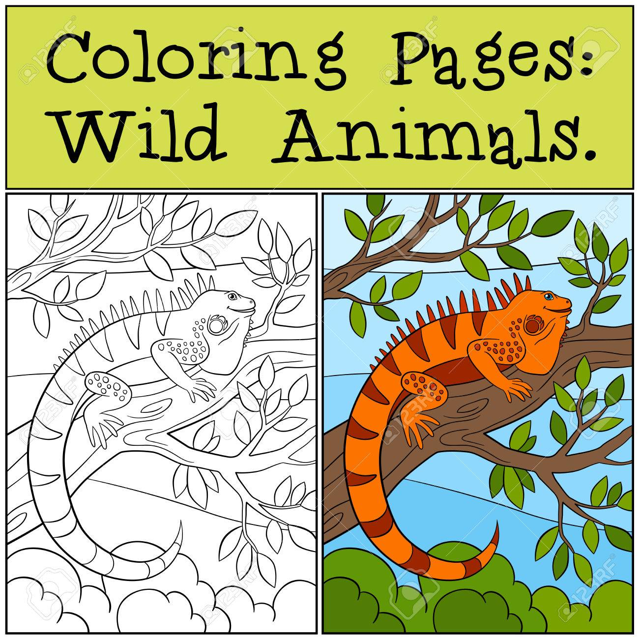Malvorlagen: Wild Animals. Nette Orange Leguan Sitzt Auf Dem Ast Und ...