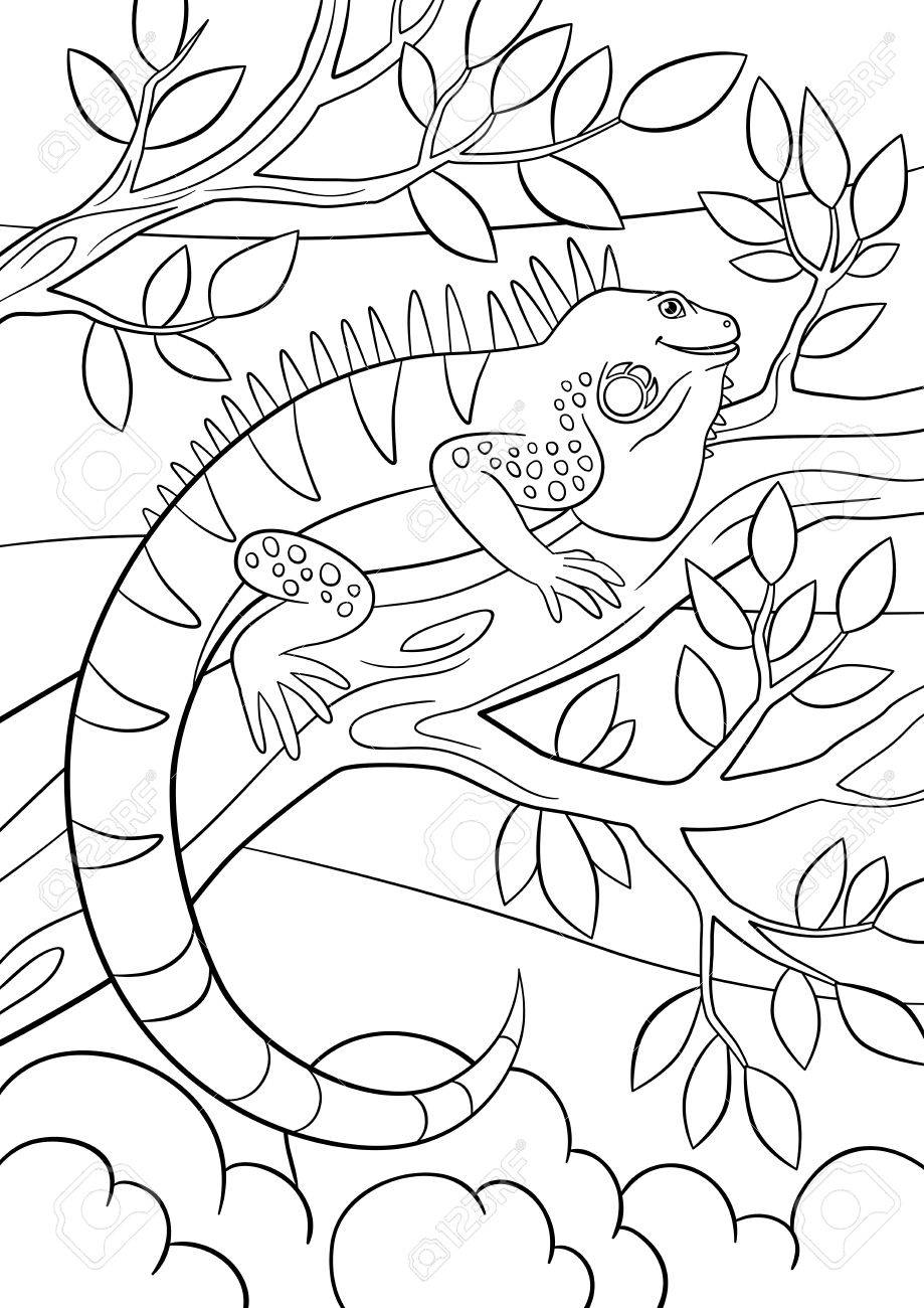 Páginas Para Colorear. Iguana Linda Se Sienta En La Rama De Un árbol ...