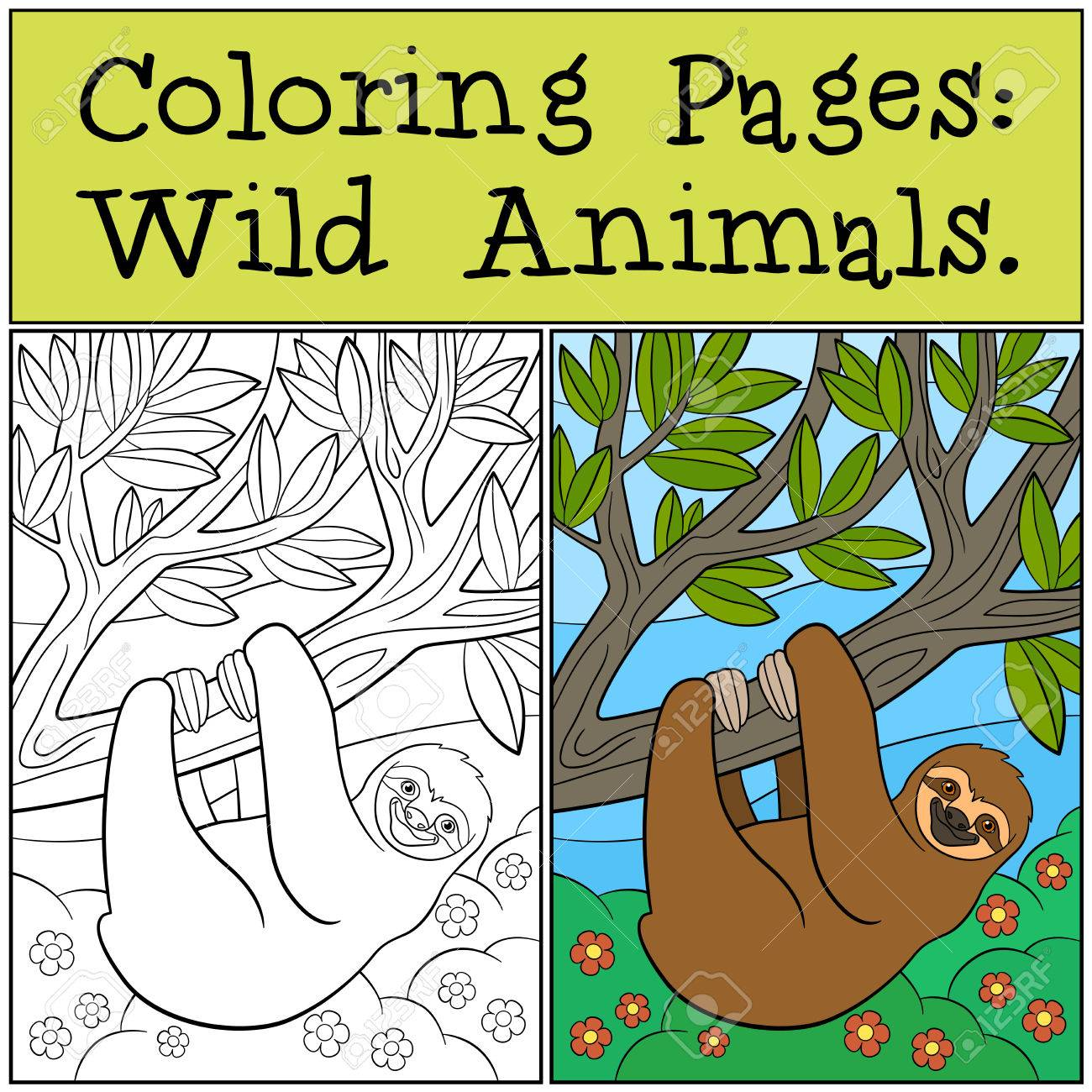 Coloring Pages: Wild Animals. Cute Lazy Sloth Hangs On The Tree ...