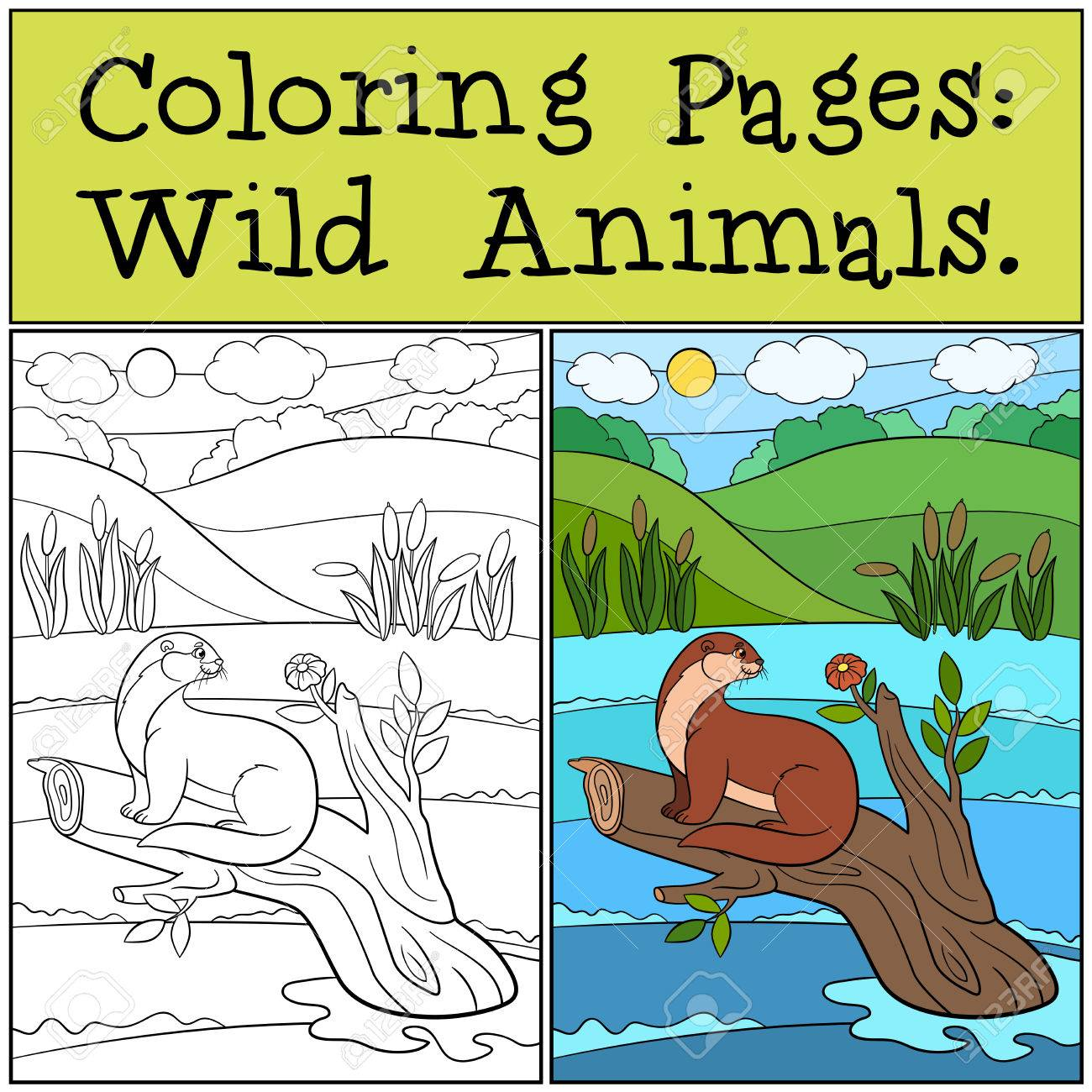 Coloring Pages: Wild Animals. Little Cute Otter Sits On The Tree ...
