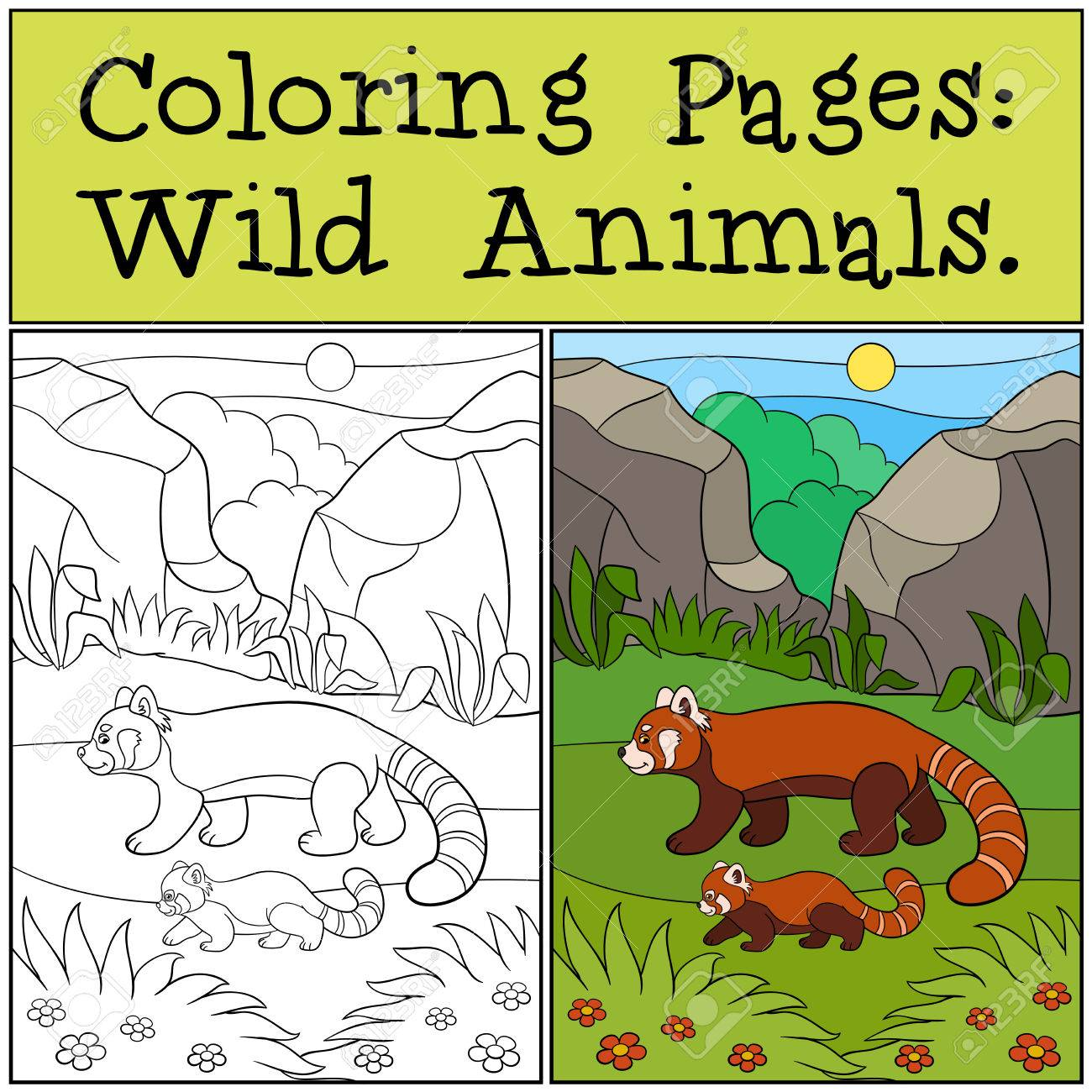 Coloring Pages: Wild Animals. Mother Red Panda Walks With Her ...