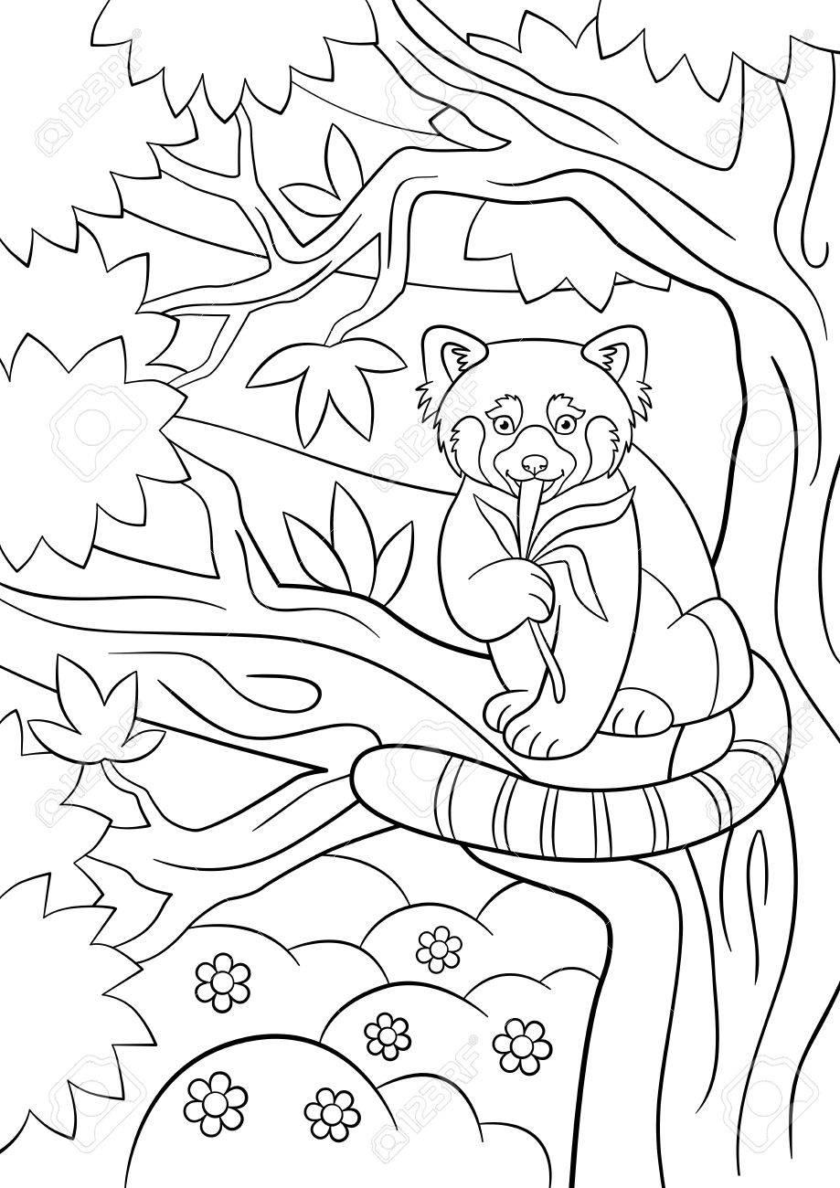 Malvorlagen. Kleine Süße Rote Panda Sitzt Auf Dem Ast Und Frisst ...